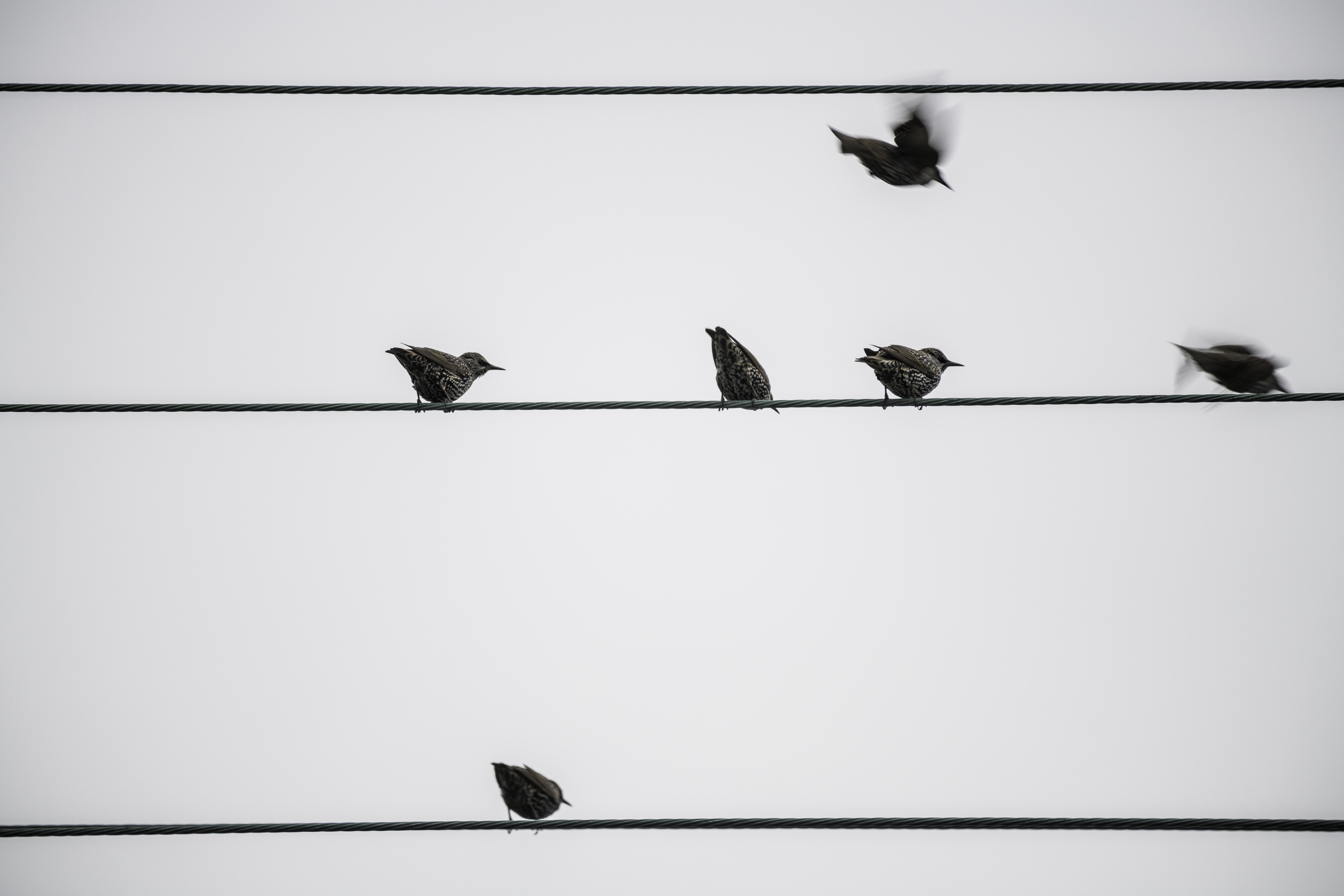 Some birds taking off from a wire image - Free stock photo - Public ...