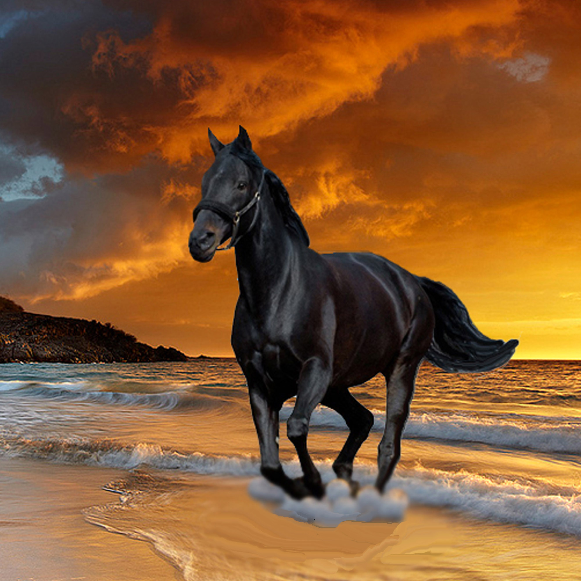 Black Beauty Stallion Horse Image Free Stock Photo Public Domain Photo Cc0 Images
