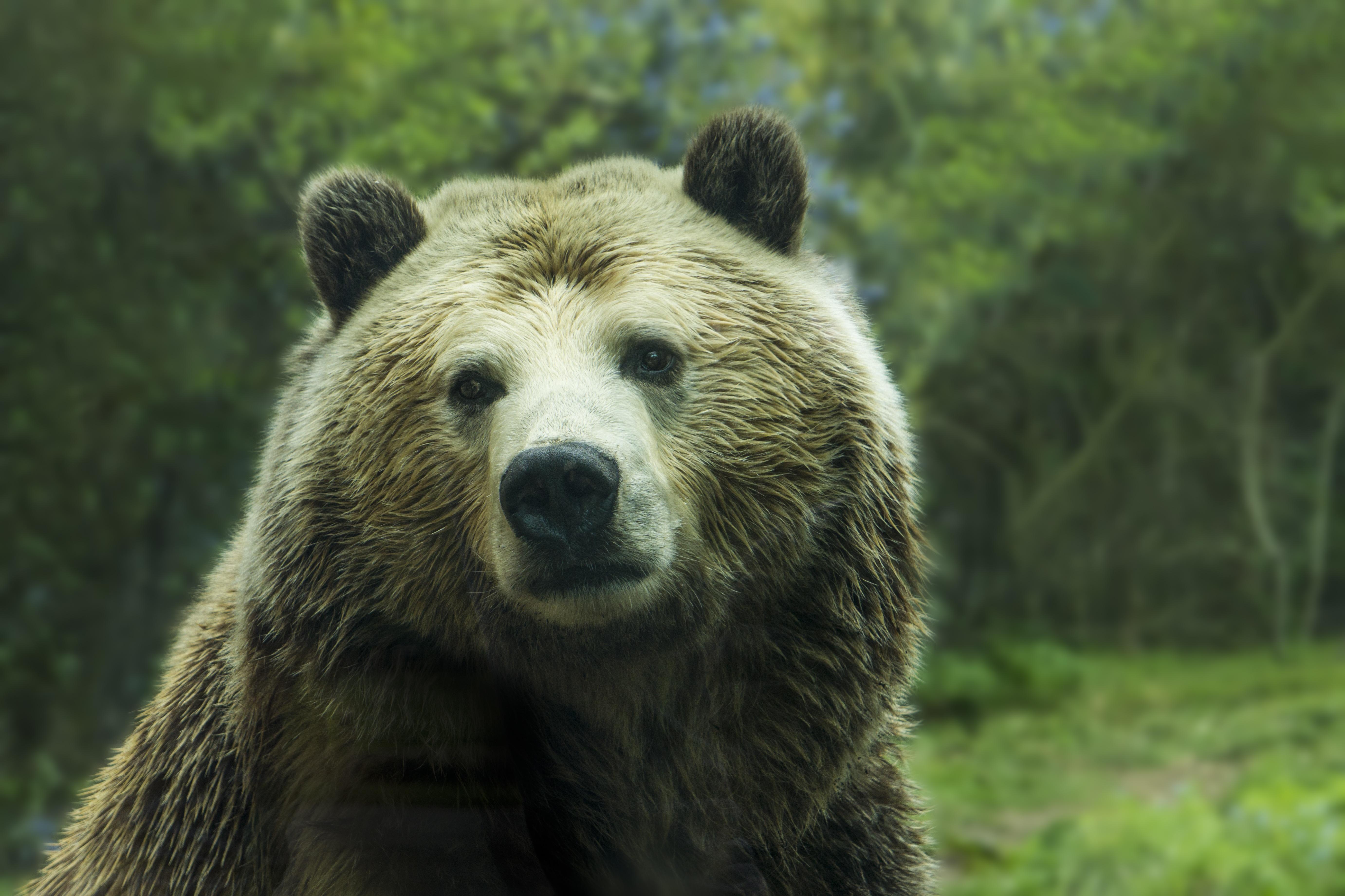 Midtown Mudblog: Protect Alaskan Wolves and Bears - photo#29