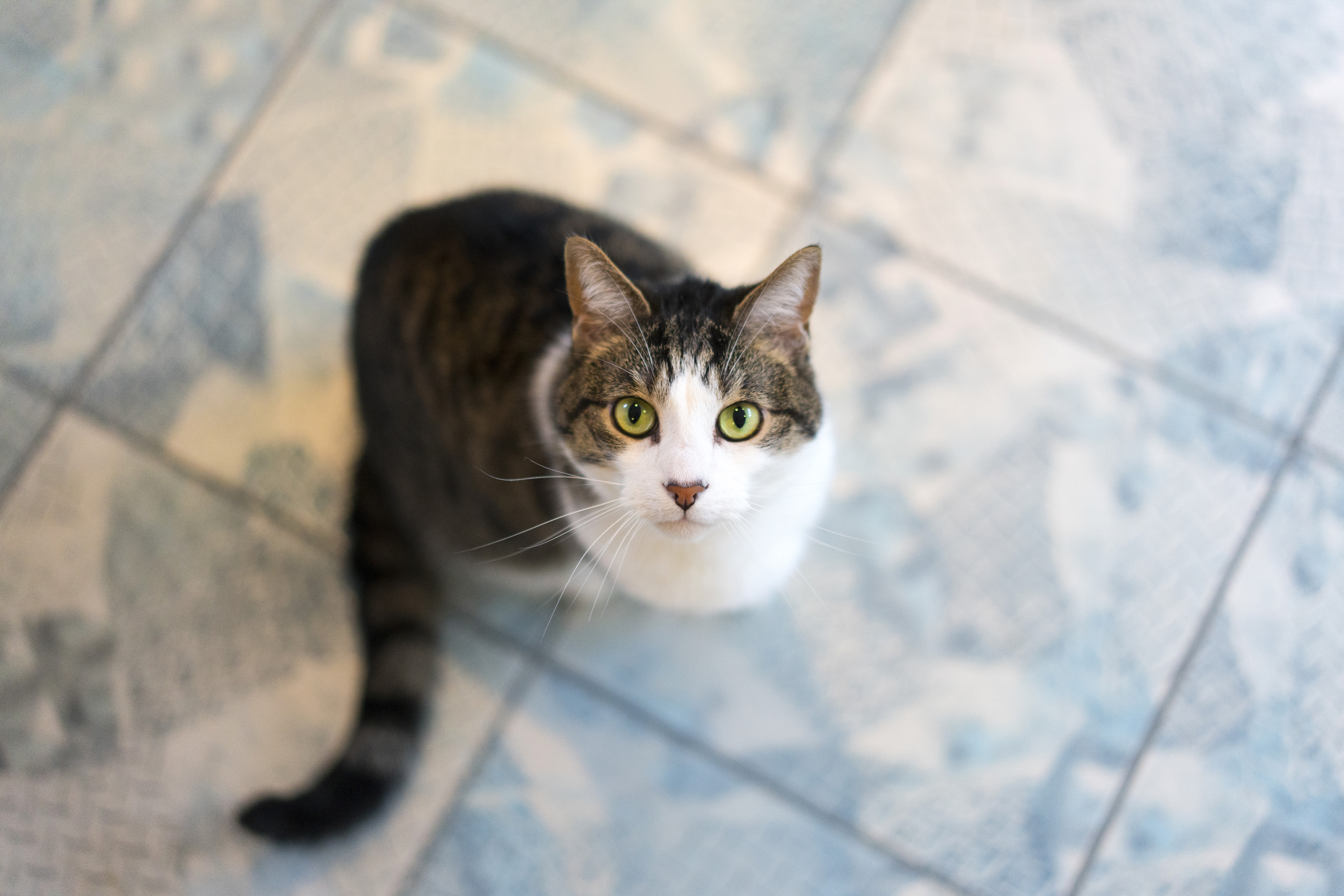 Small Kitty looking up image - Free stock photo - Public