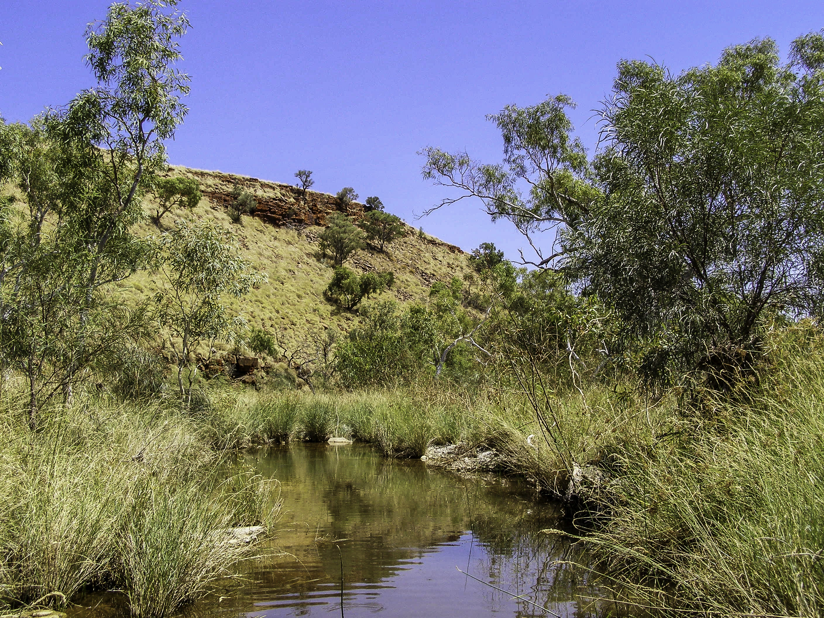 Landscape And Stream In Western Australia Image Free