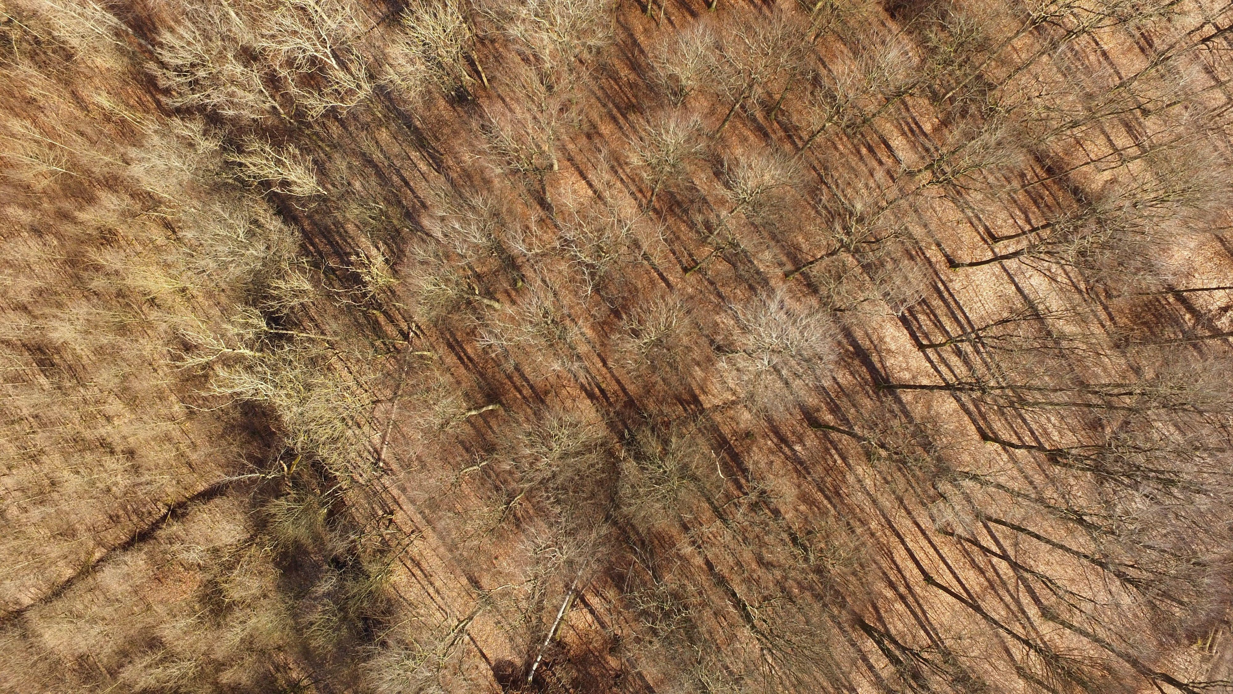 Top Down View Of The Forest In Torrild Denmark Photo By Benjamin Sloth Lindgreen