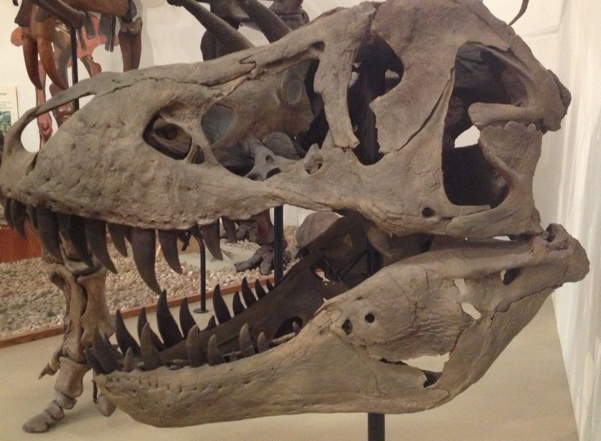 2106 x 1548 jpeg 508kBTyrannosaurus
