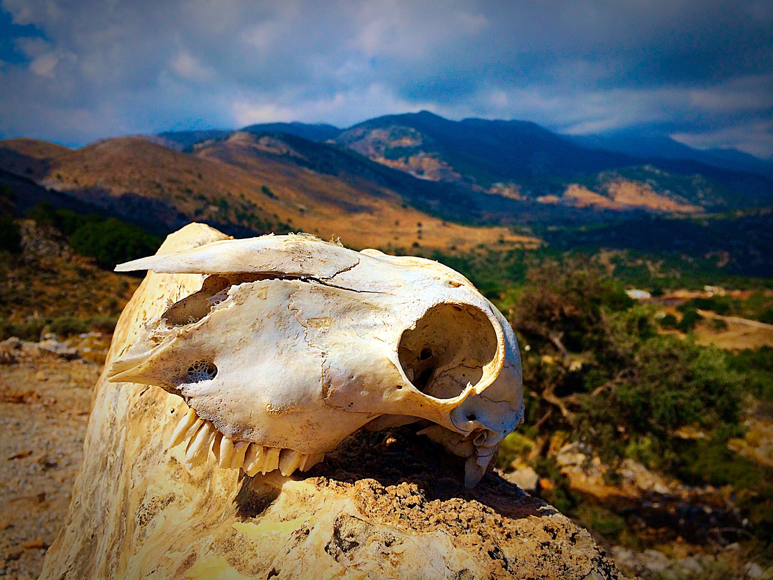 Skull With Landscape Background On Crete Greece Image