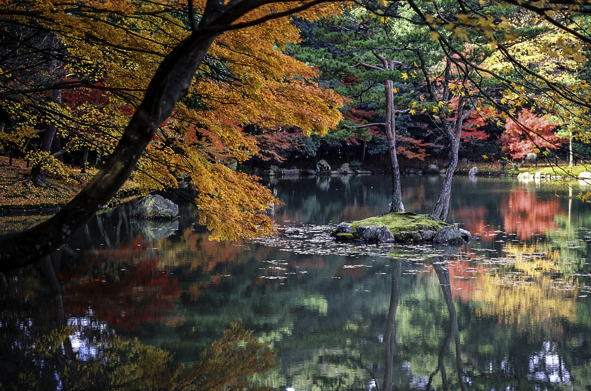 Autumn Leaves and Lake in Kyoto, Japan image - Free stock photo ...