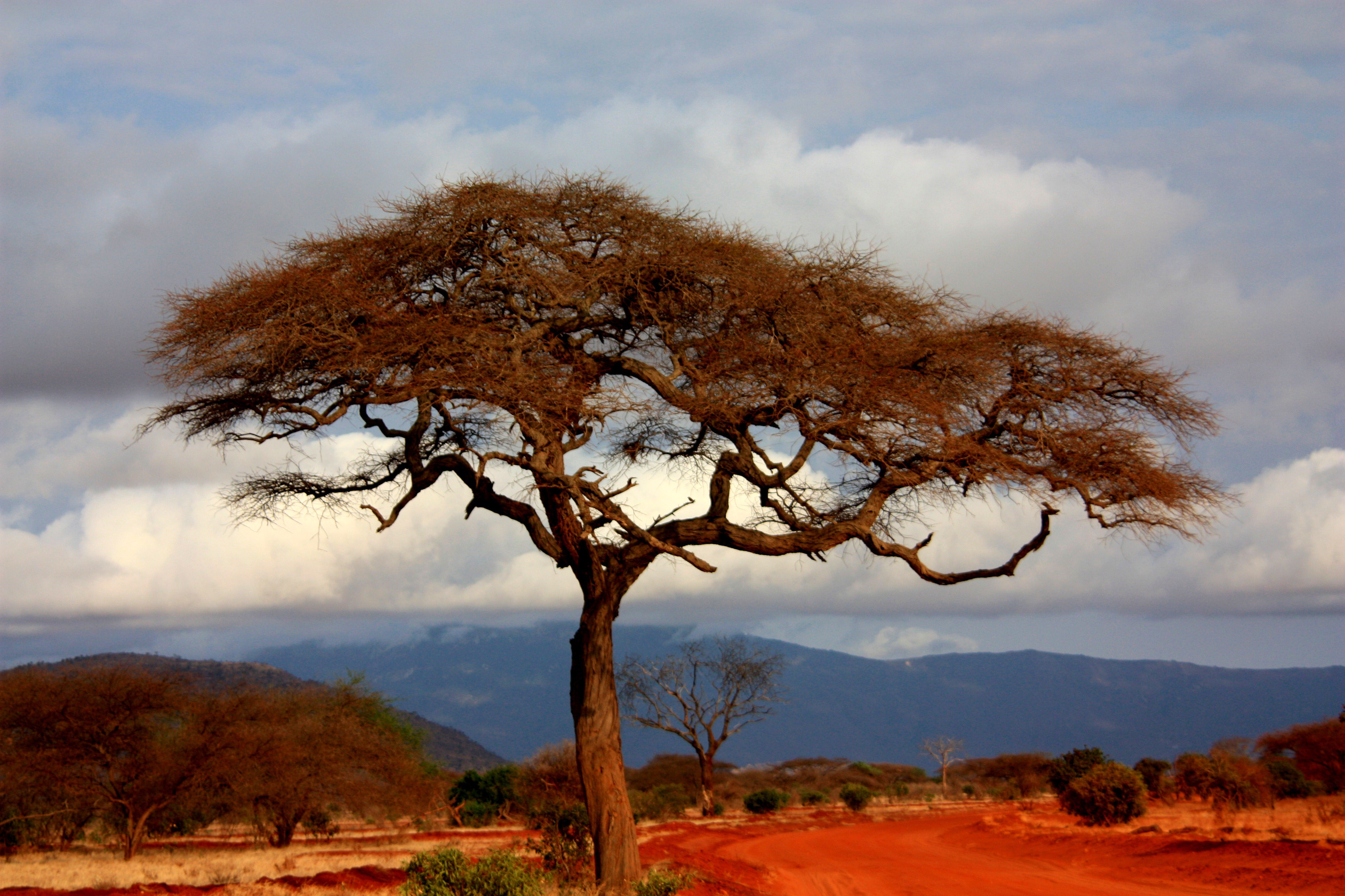 Trees in the landscape in Kenya on the Plains - Free Public Domain ...