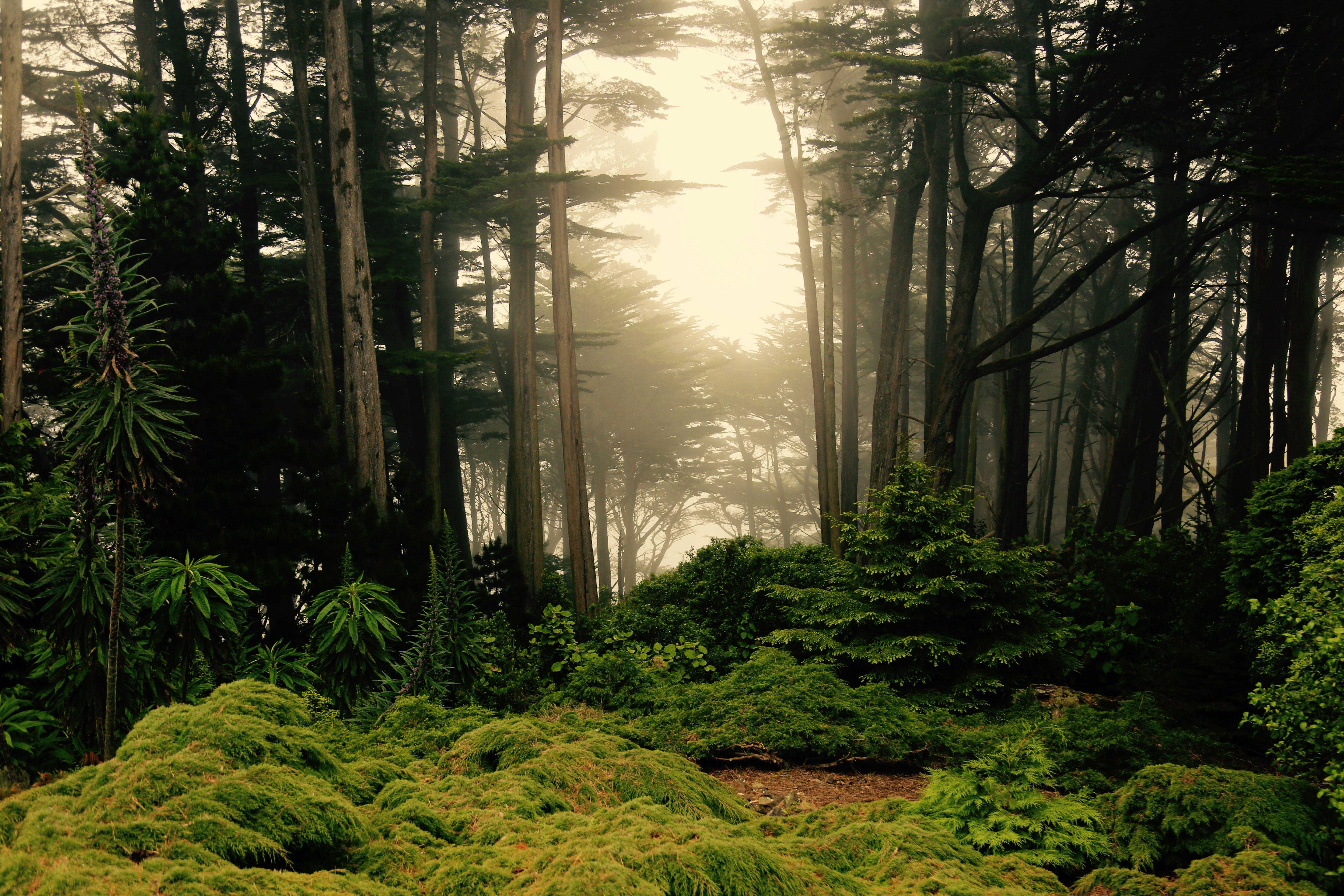 magical forest scene in new zealand image free stock photo