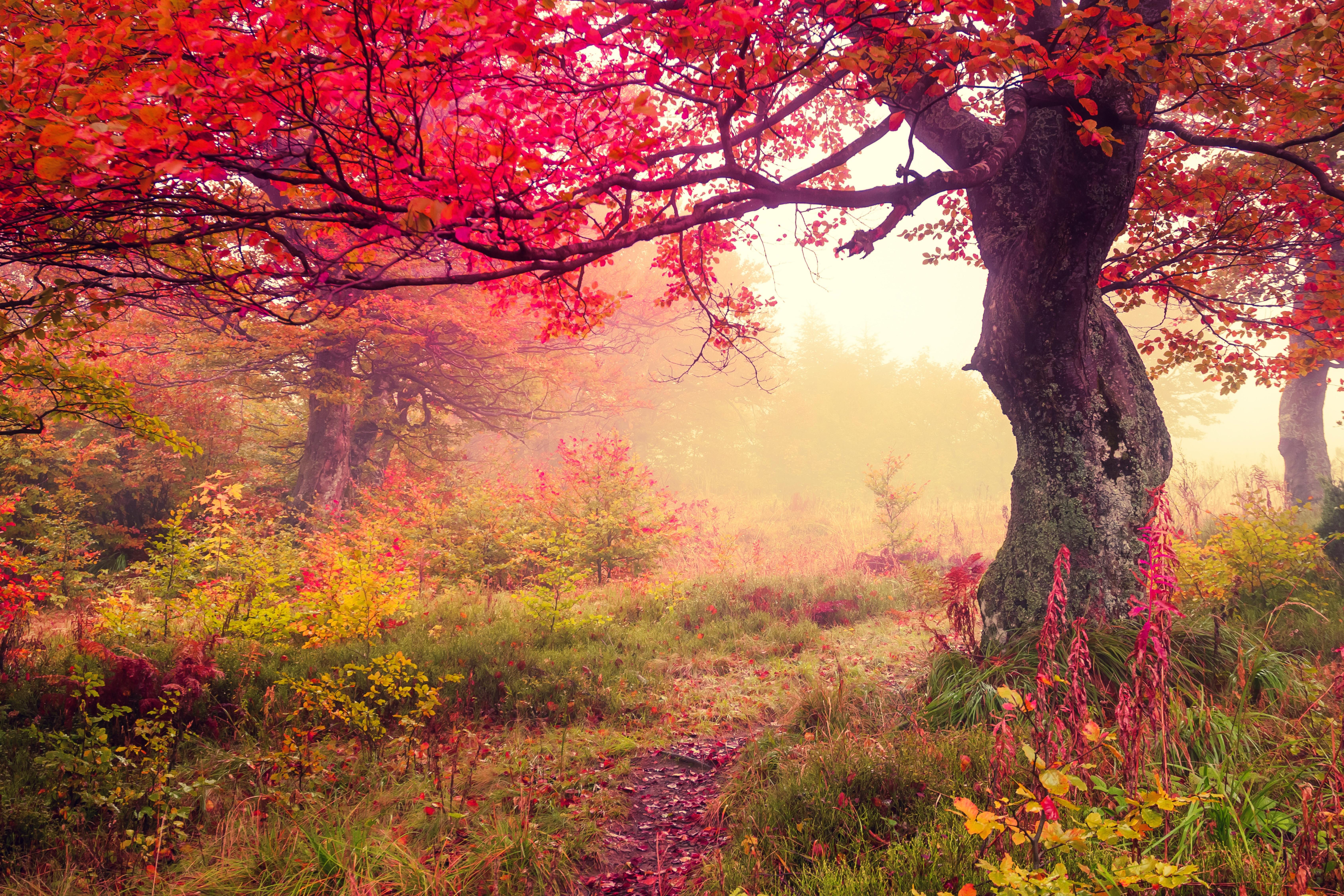 Autumn Landscape With Fog Scenery Image Free Stock Photo