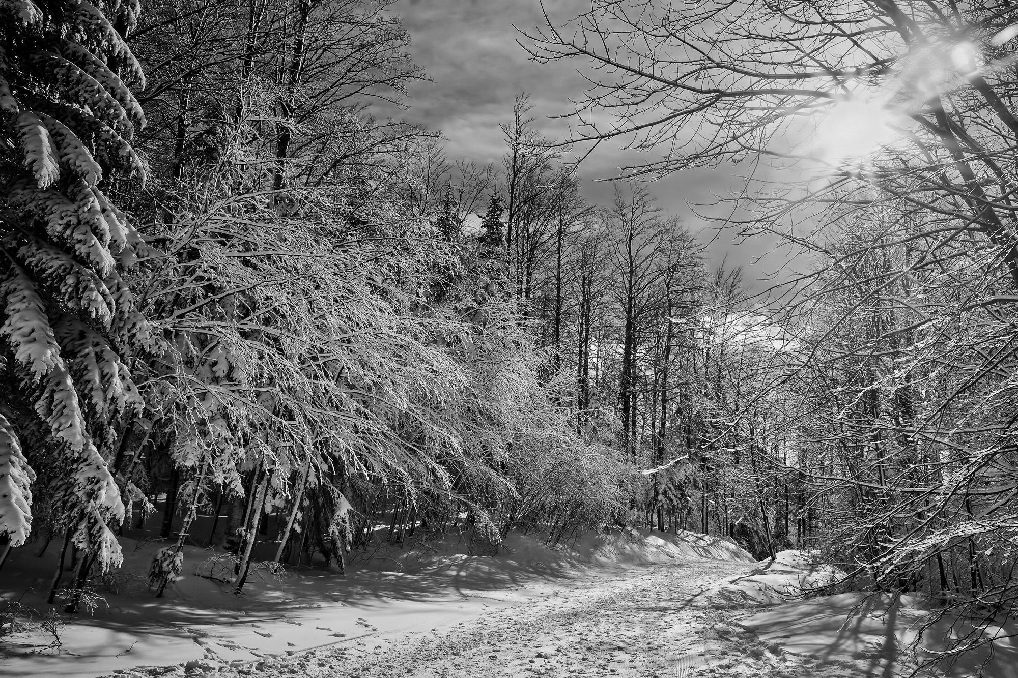 road, Snow, Black, White, Winter, Forest, Nature ... |Winter Forest Black And White