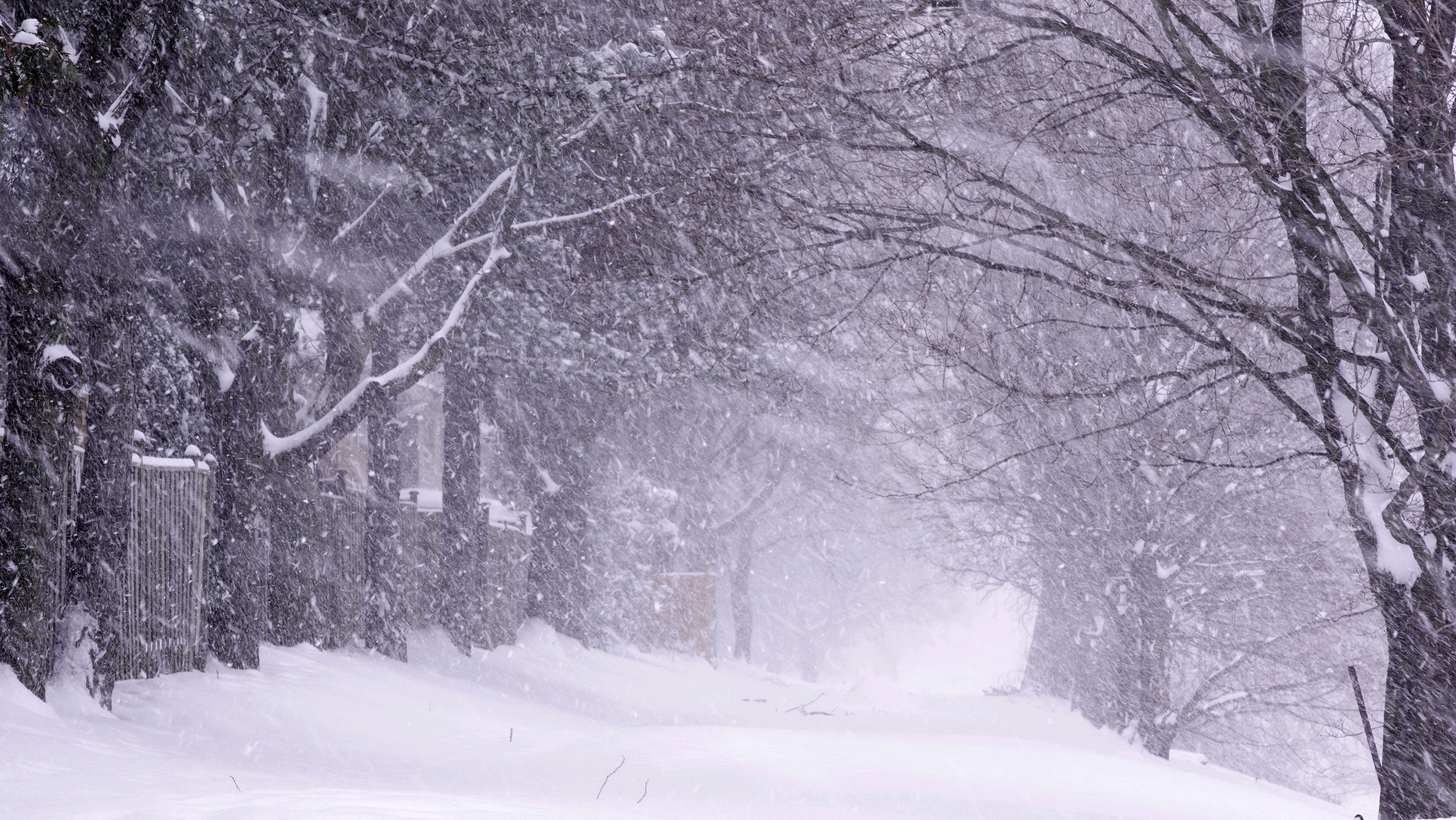 Blizzard in the woods image - Free stock photo - Public ...