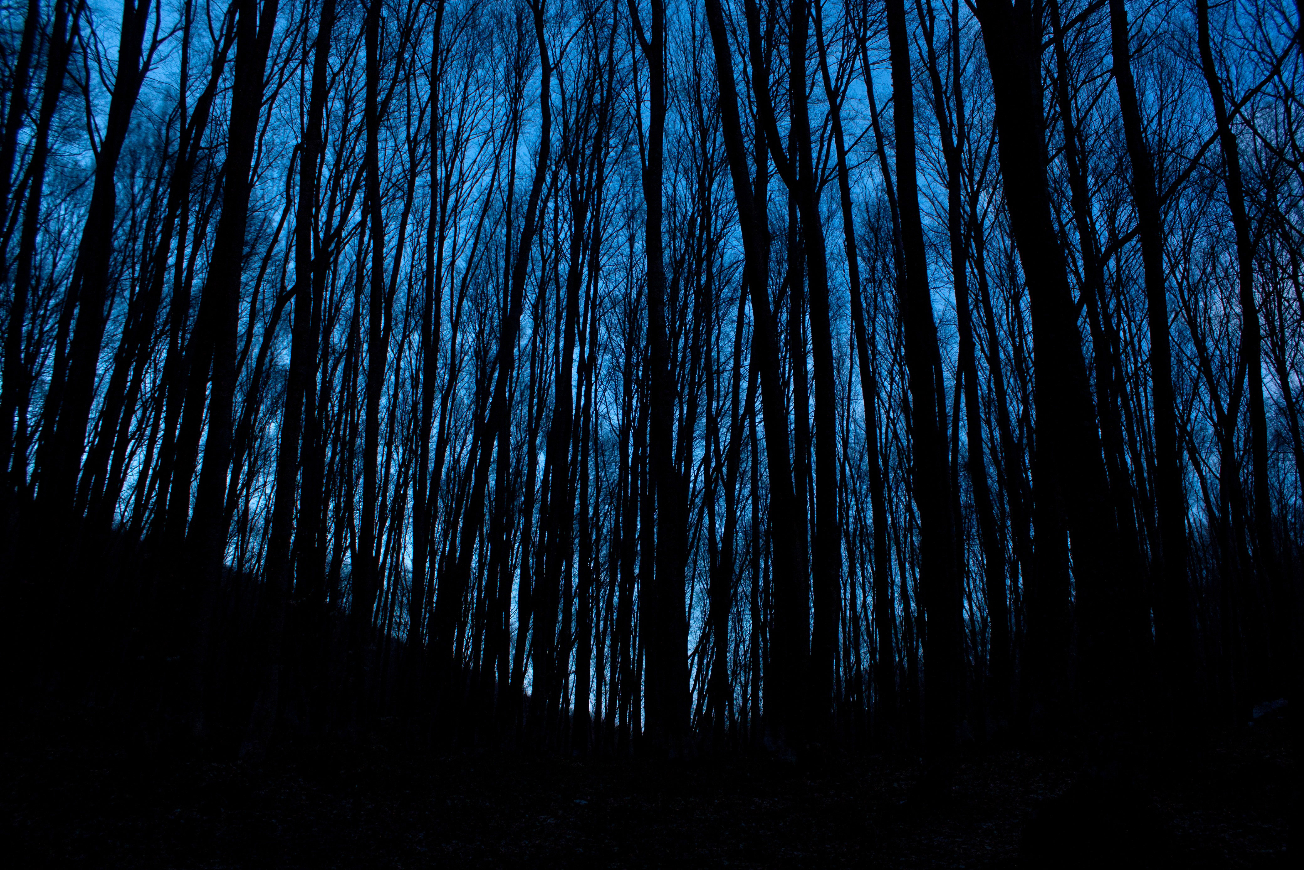 a night in the forest One night i felt like something bad was going to happen being me i decided to go for a walk in the forest i brought my night vision goggles my dad had gotten for me.