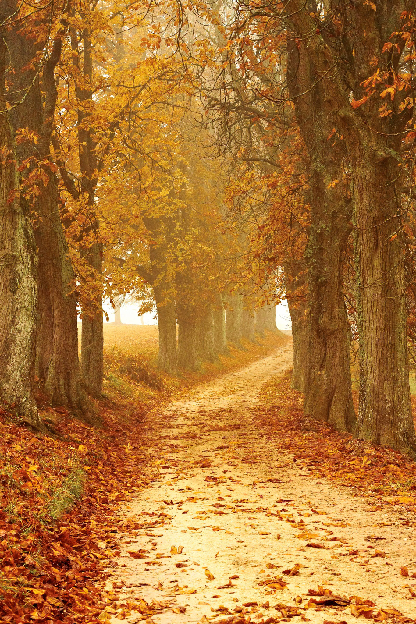 Golden Path In Autumn Between The Trees Image