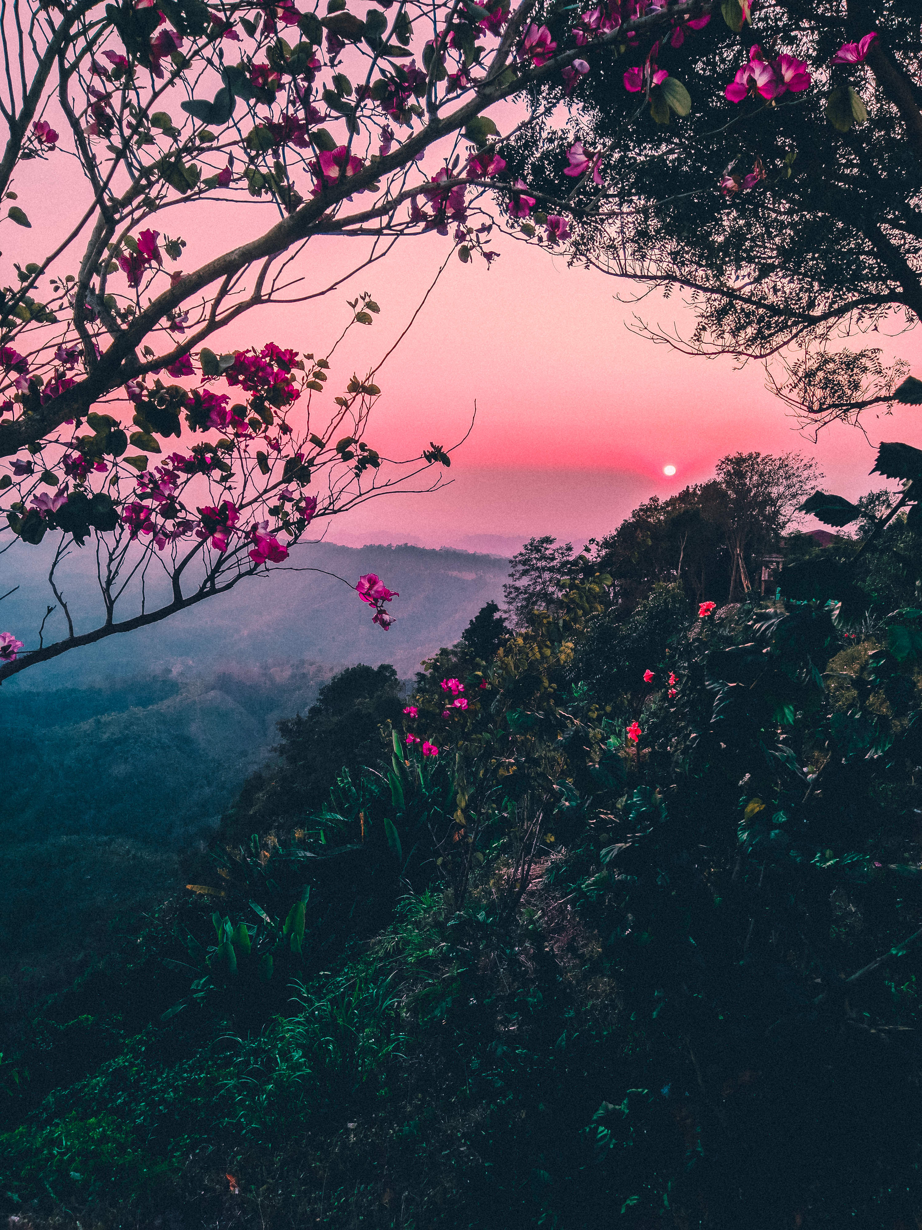 Pink Skies With Trees And Flowers Image Free Stock Photo