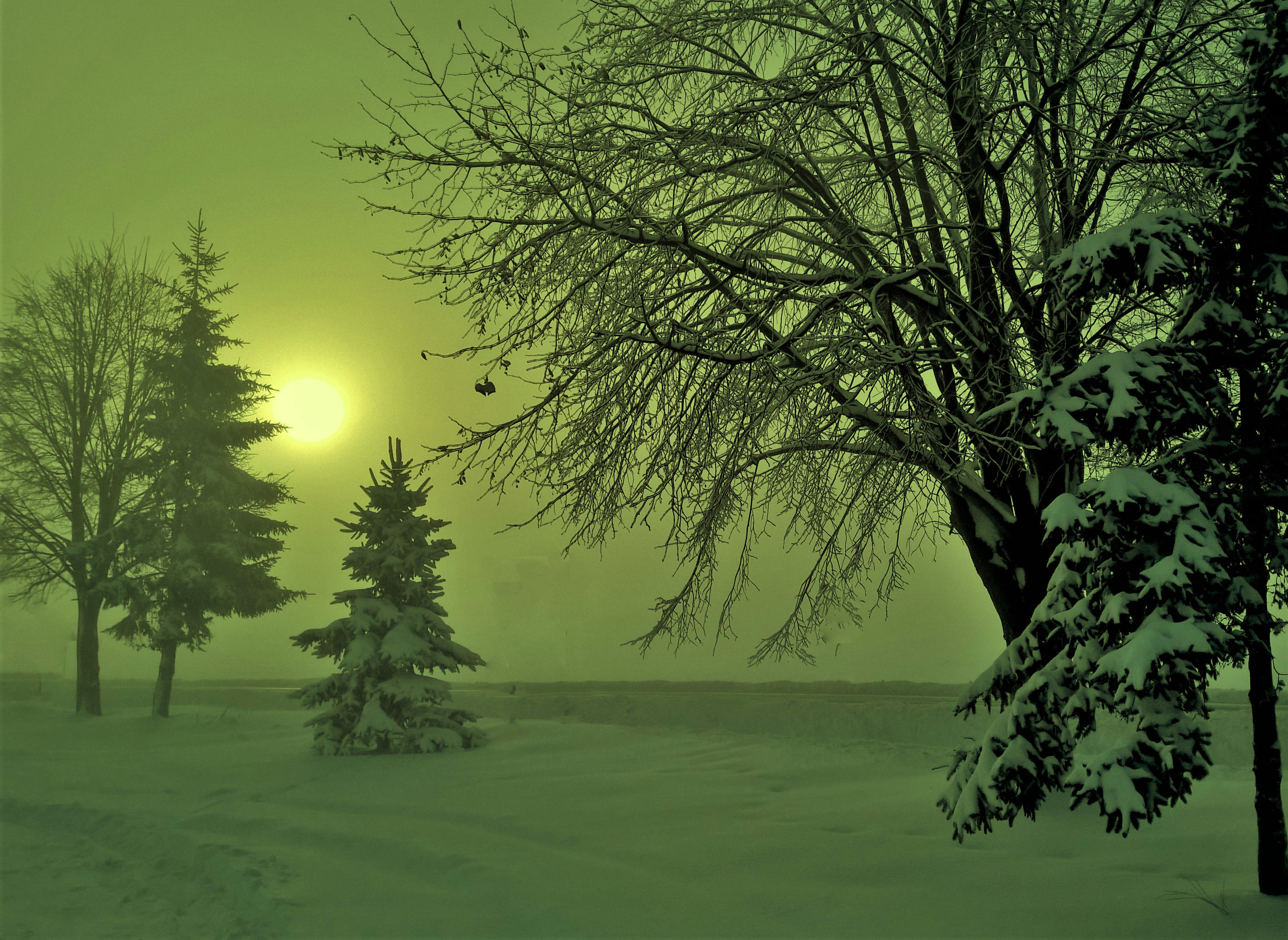 Free Photos > Other Landscapes Photos > Snowy Winter Scene ...