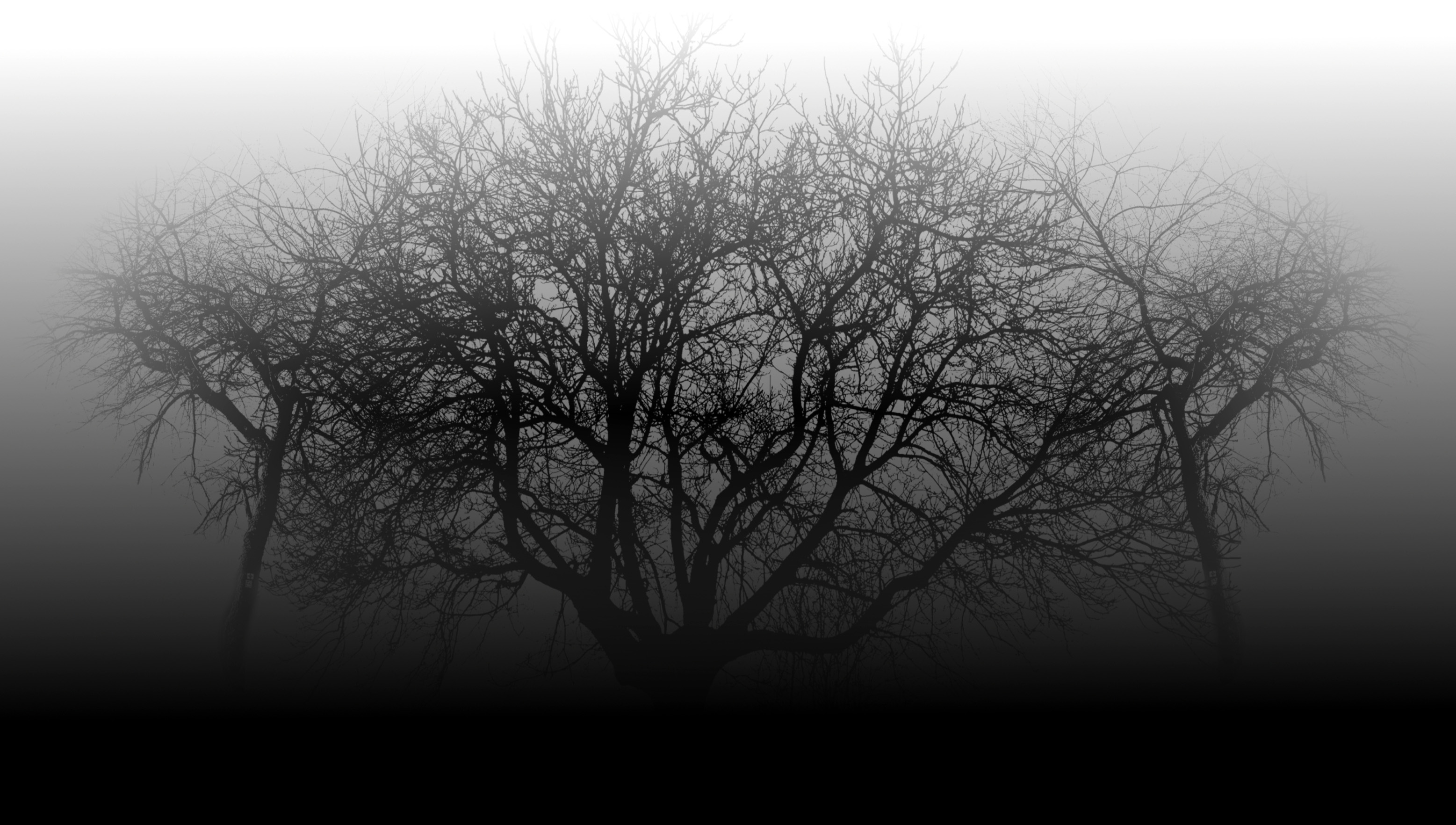 Image result for free images of mist