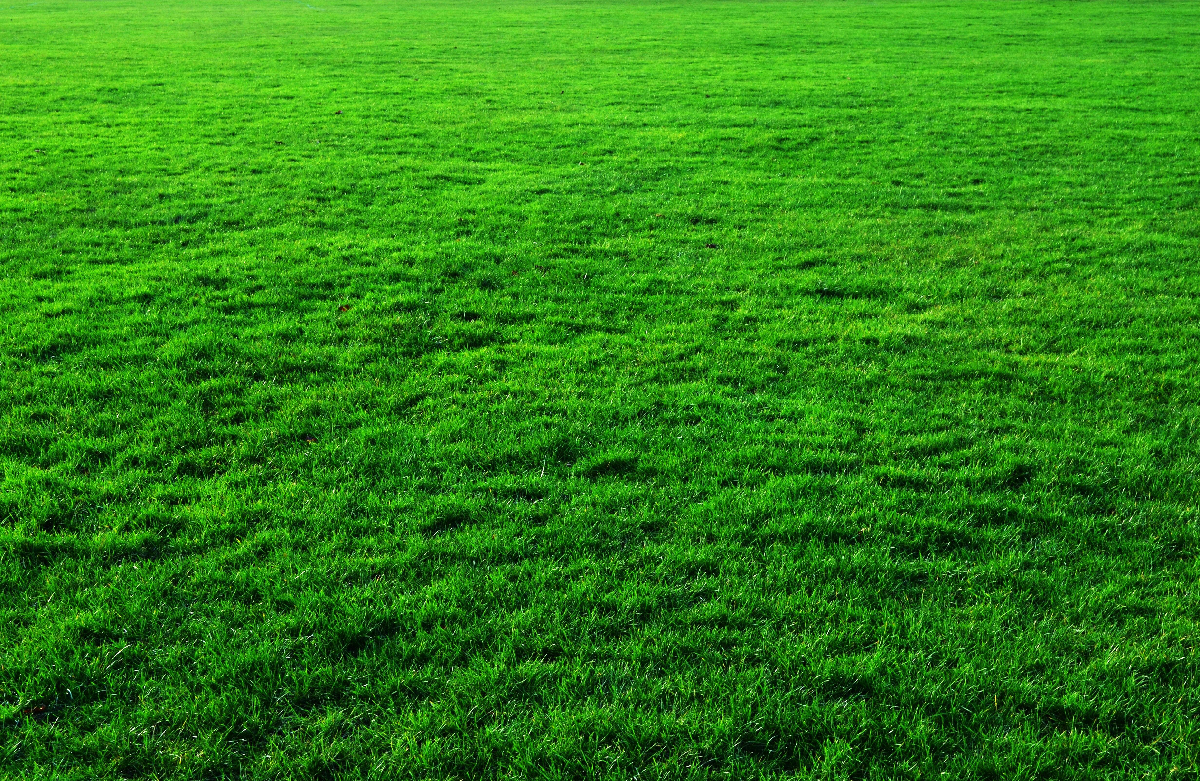 трава текстура  № 1309967 без смс