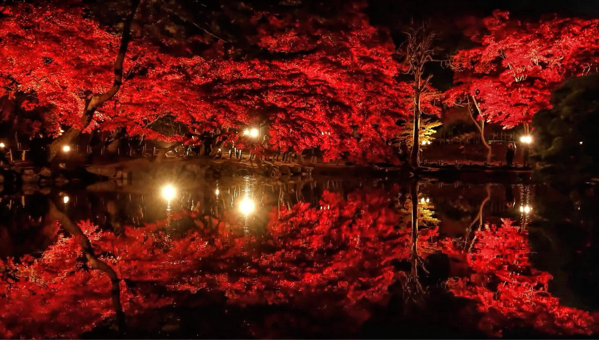 Red Trees Lights And Reflection In Garden Image Free