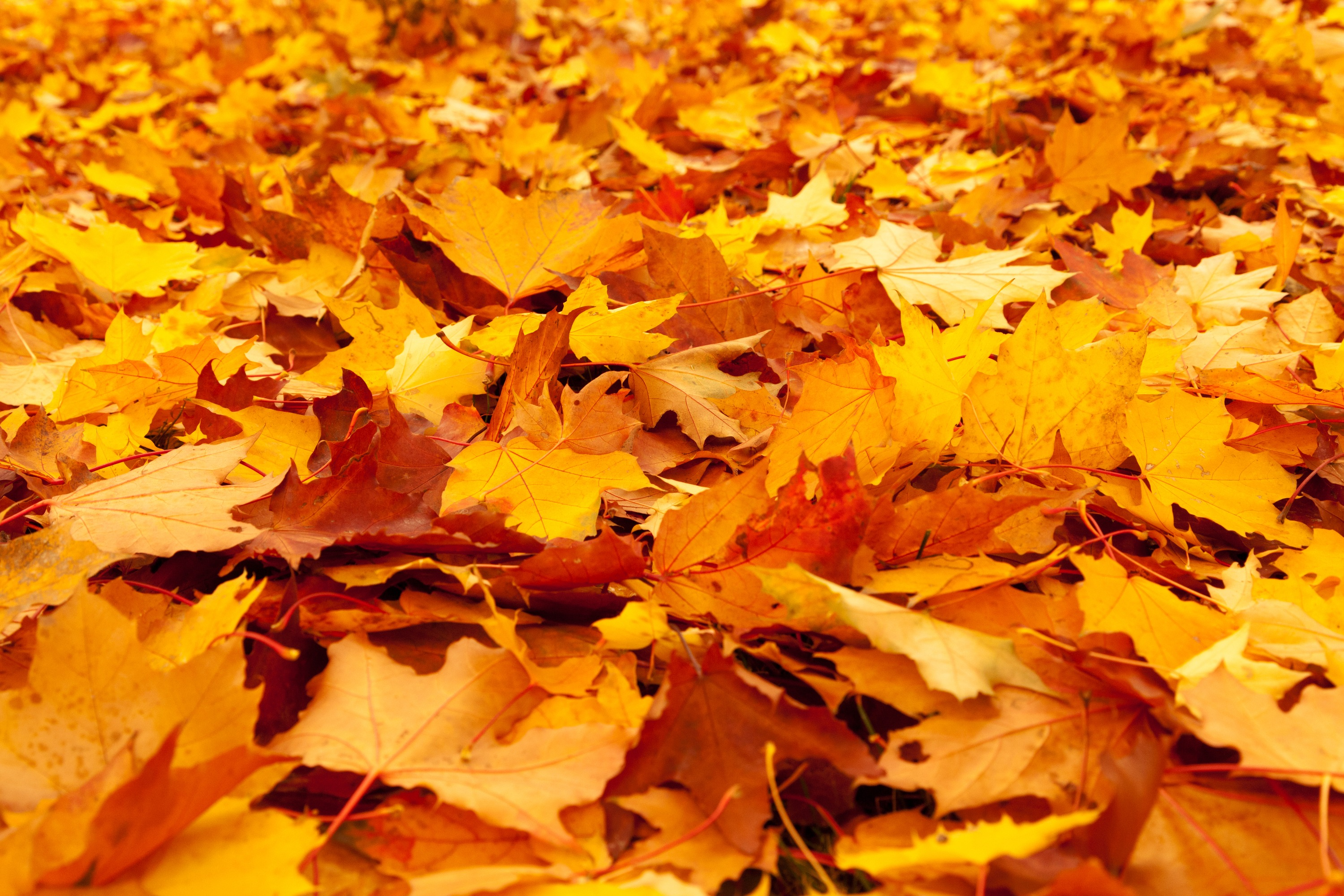 yellow leaves on forest floor image free stock photo