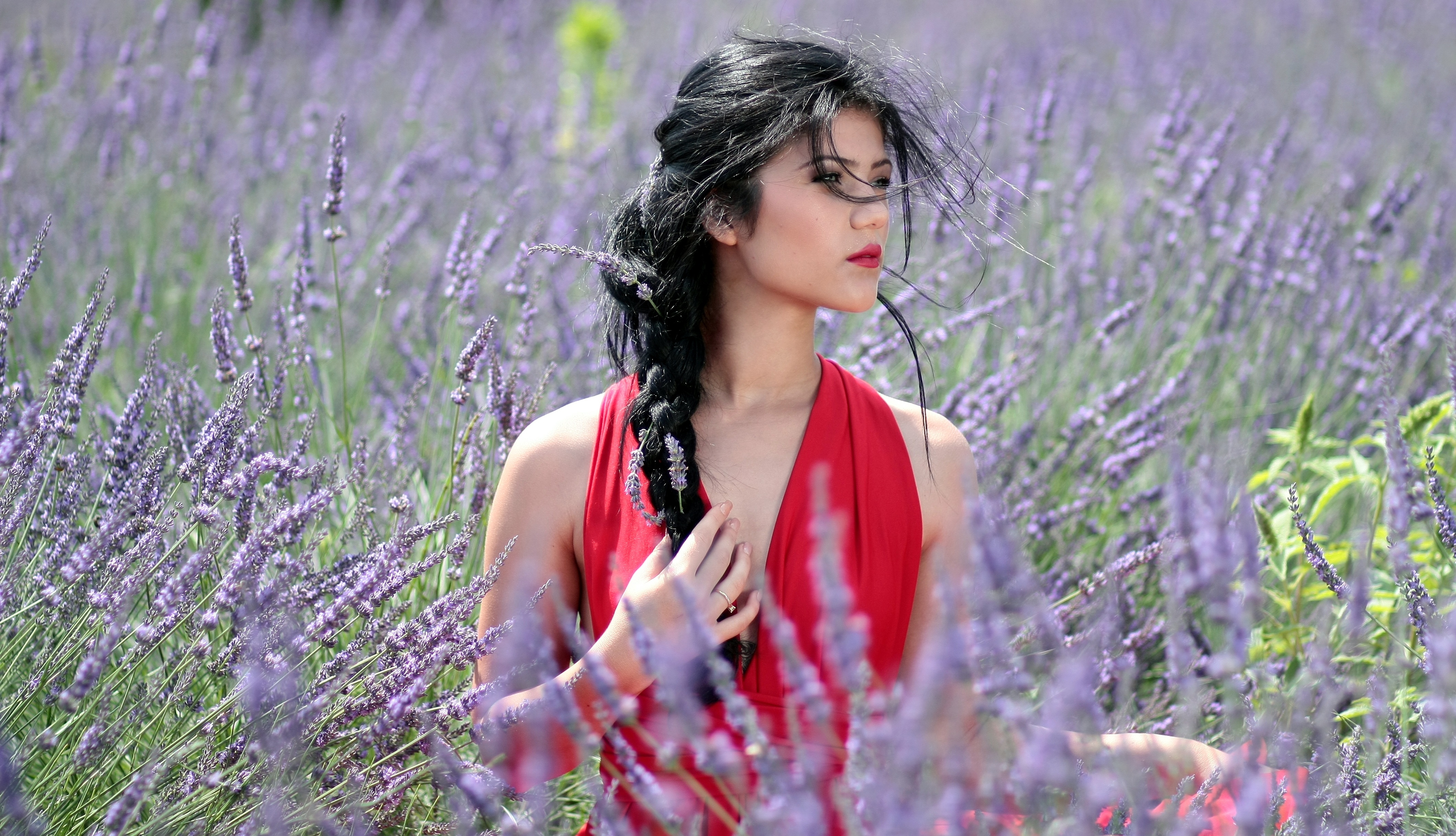 Beautiful Girl In Lavender Flowers Image Free Stock