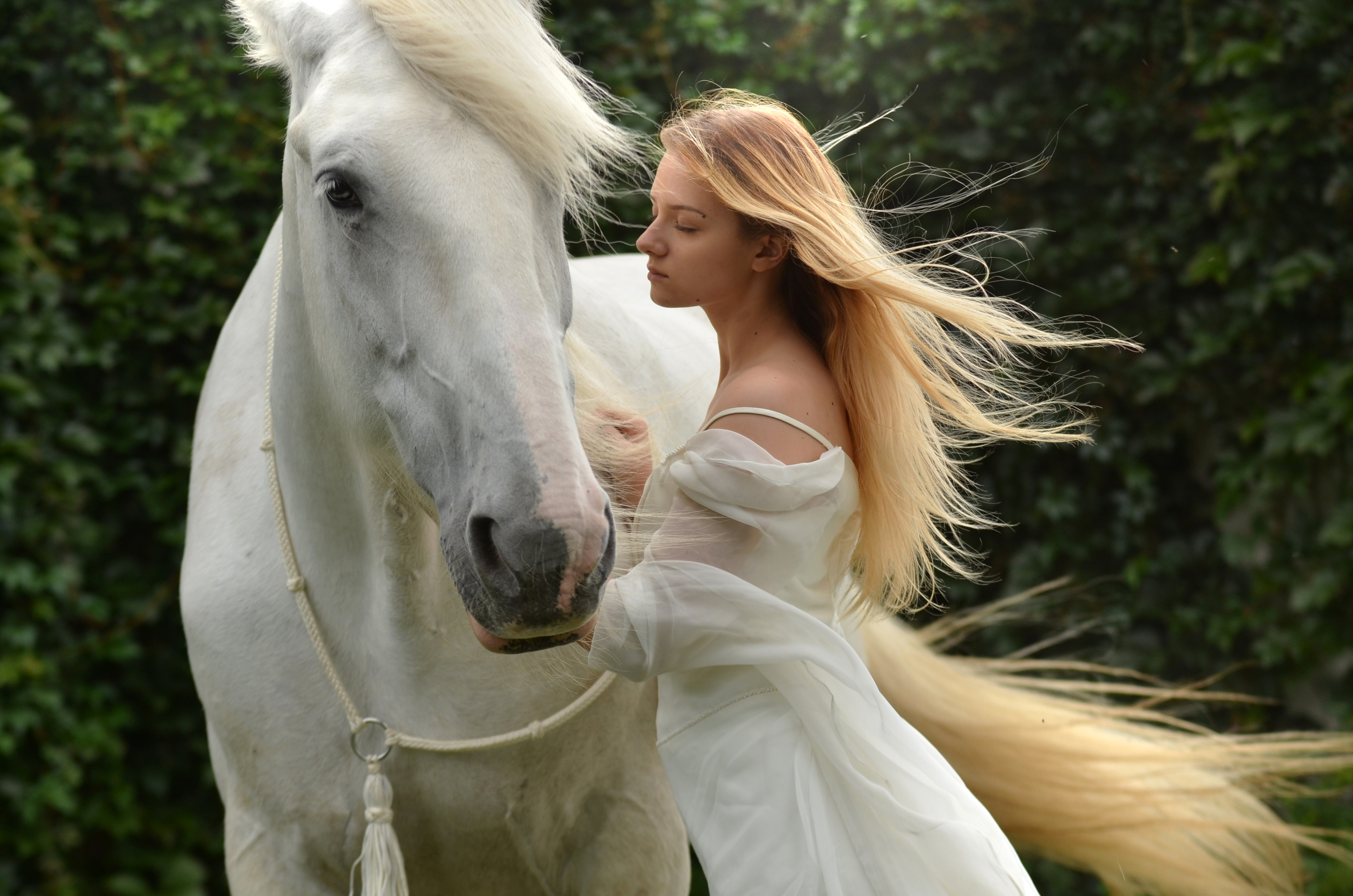 Girl In White Dress With Long Hair With White Horse Image - Free Stock Photo - Public -3627
