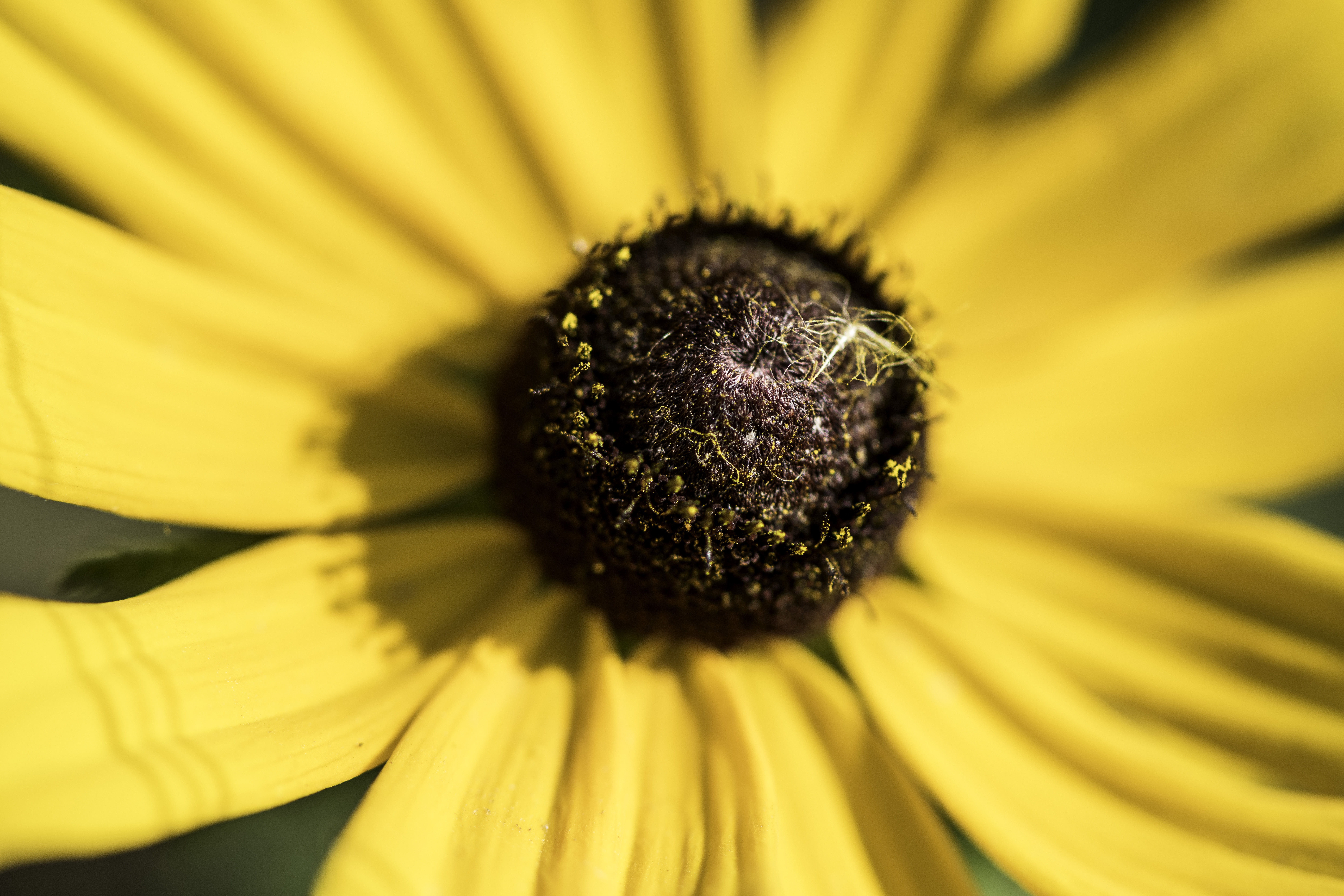 Macro Of Yellow Flower With Detailed Core Image Free Stock Photo