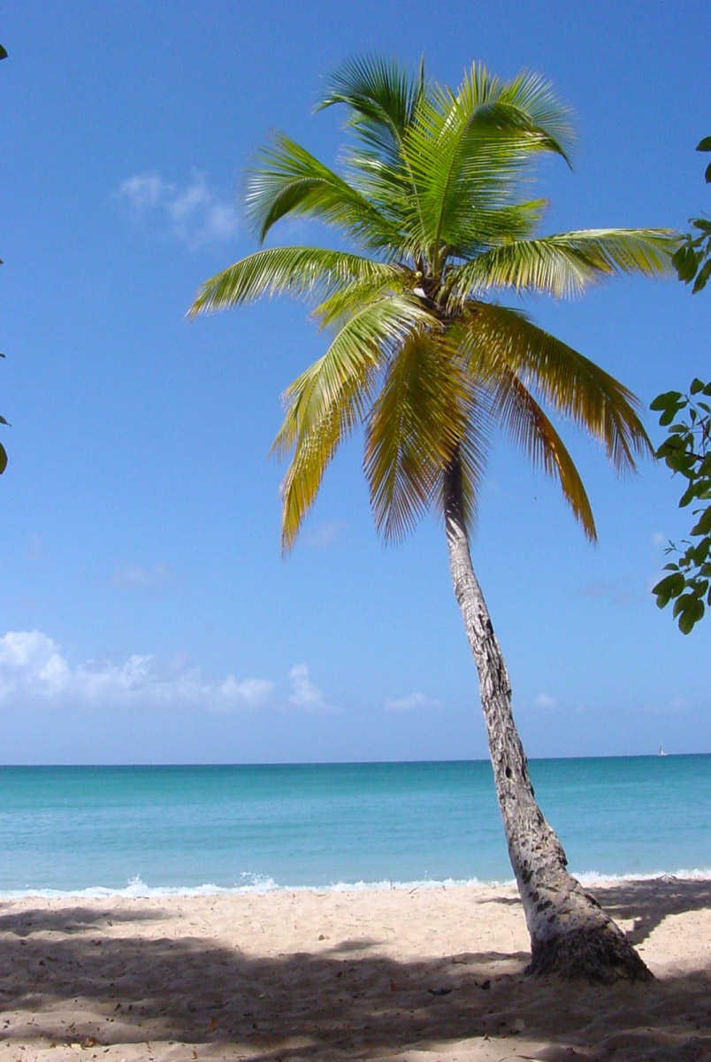 Palm Tree Standing On The Beach Near The Ocean Image