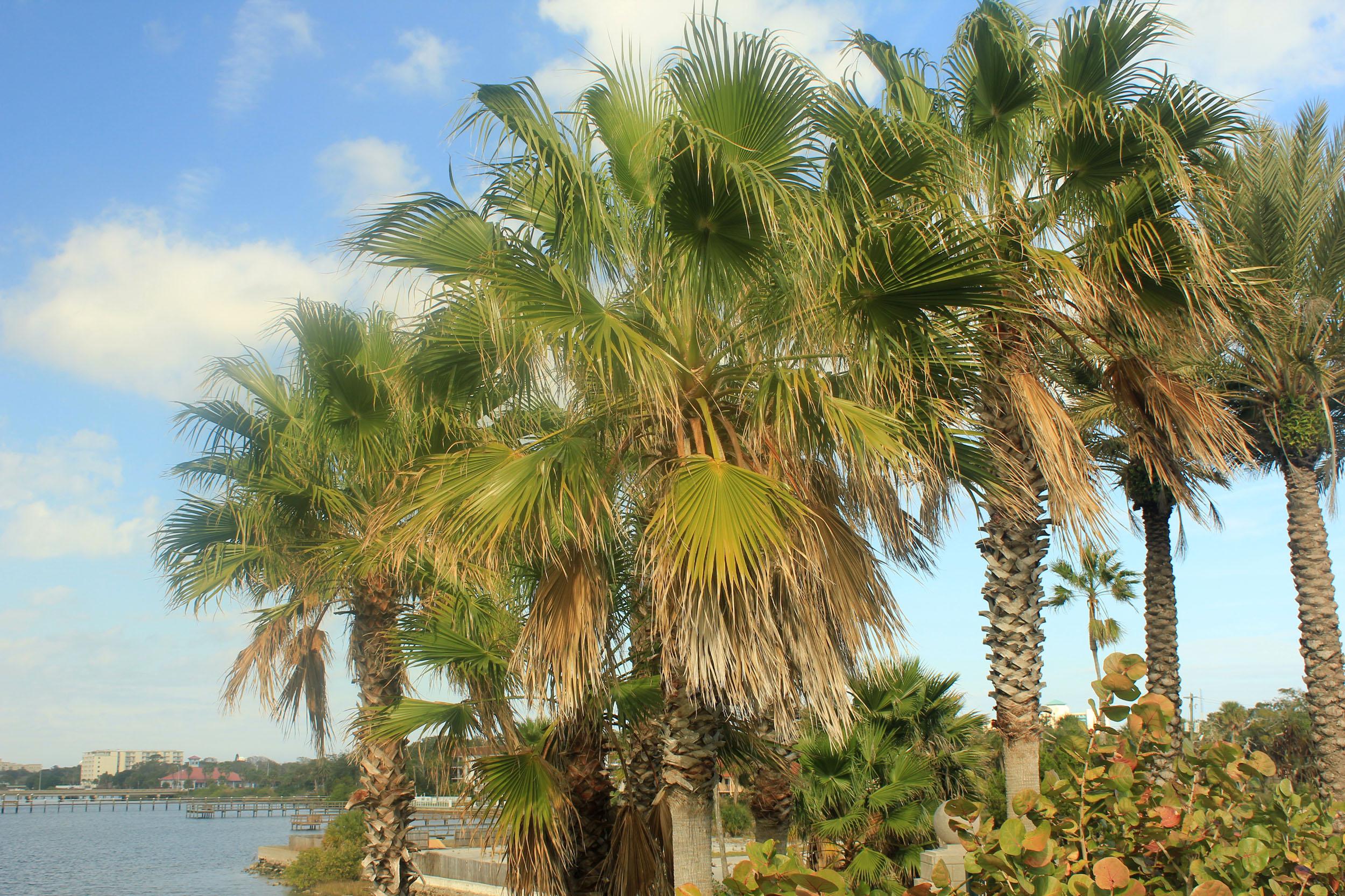 palm trees image free stock photo public domain photo cc0 images
