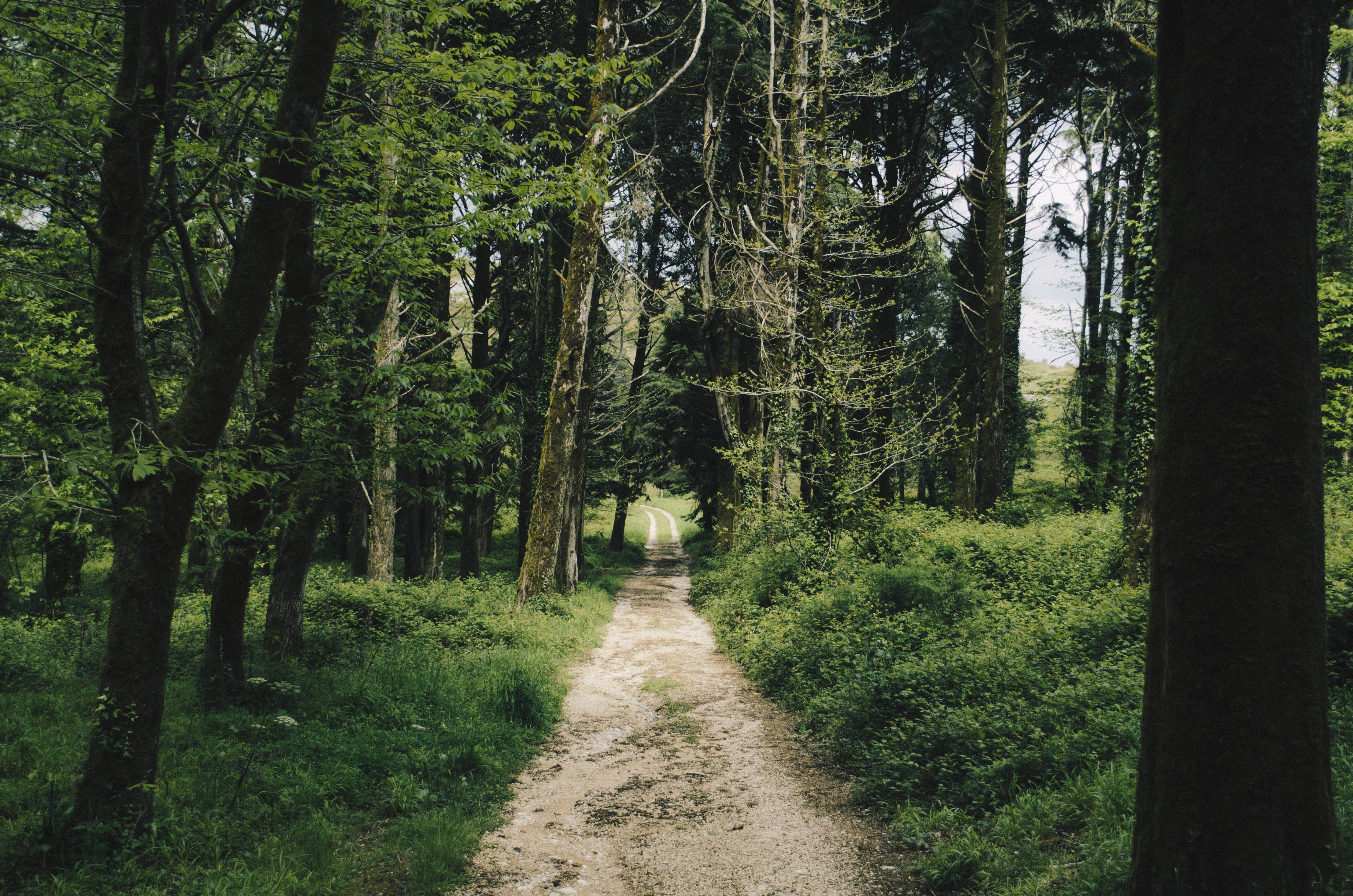 Nature Trail At Travessa Do Montejunto Portugal Image