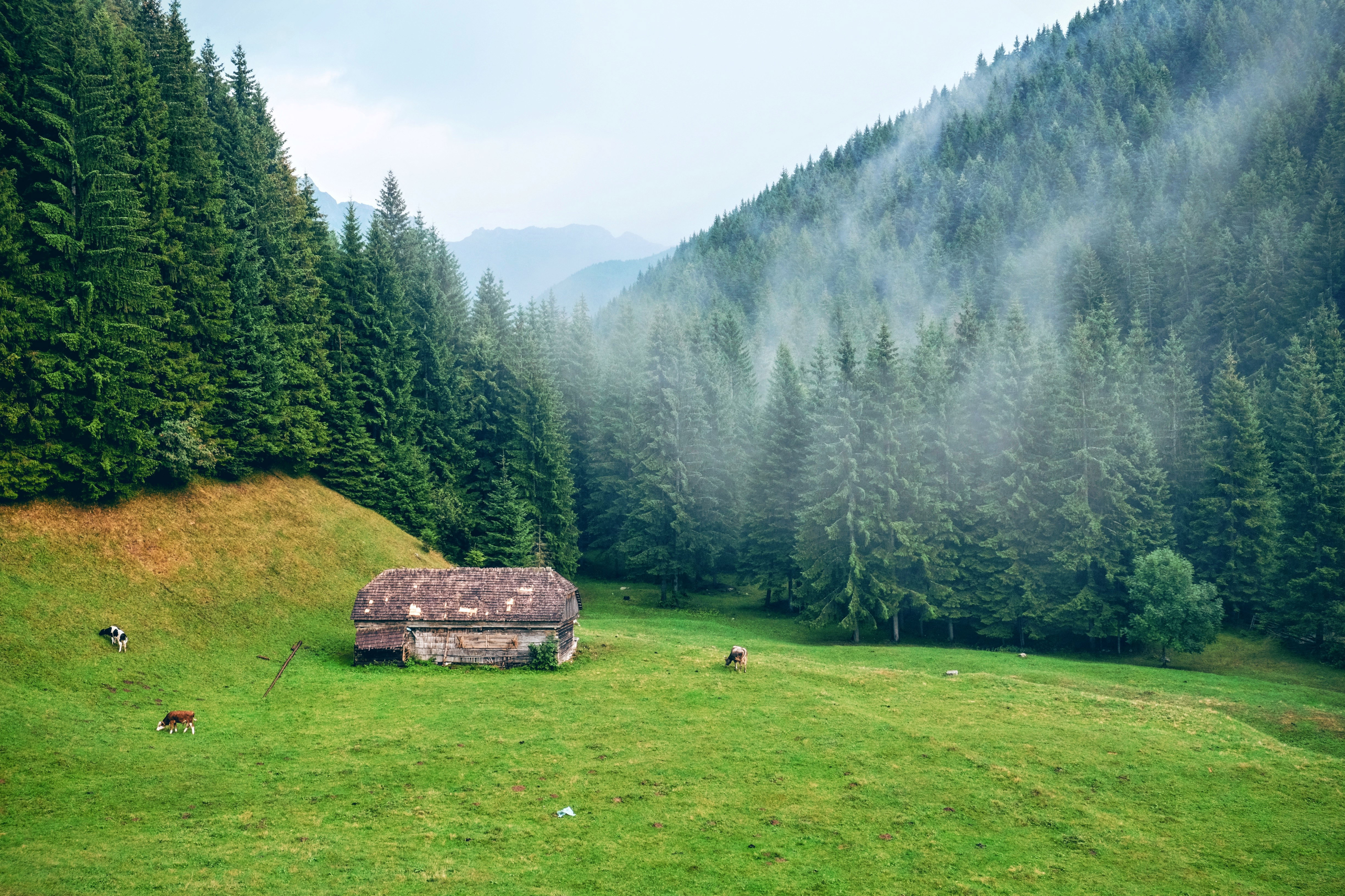 Mountain and Forest landscape in Romania image - Free ...