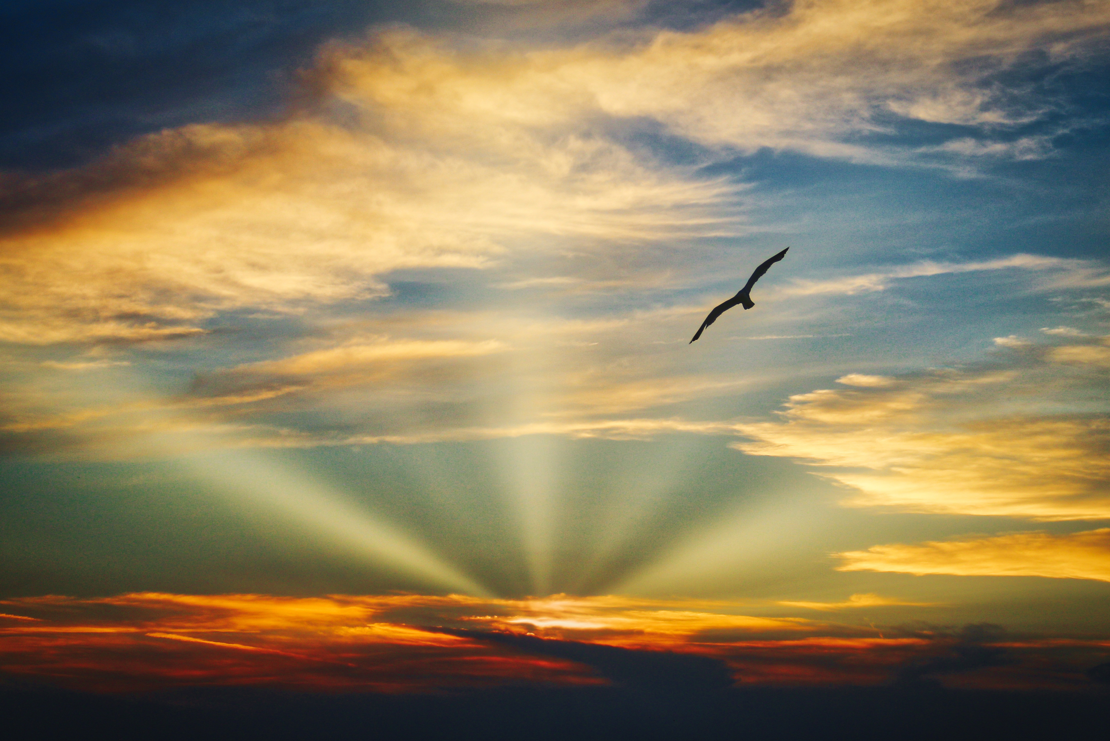 bird flying in the sky with evening light image free stock photo