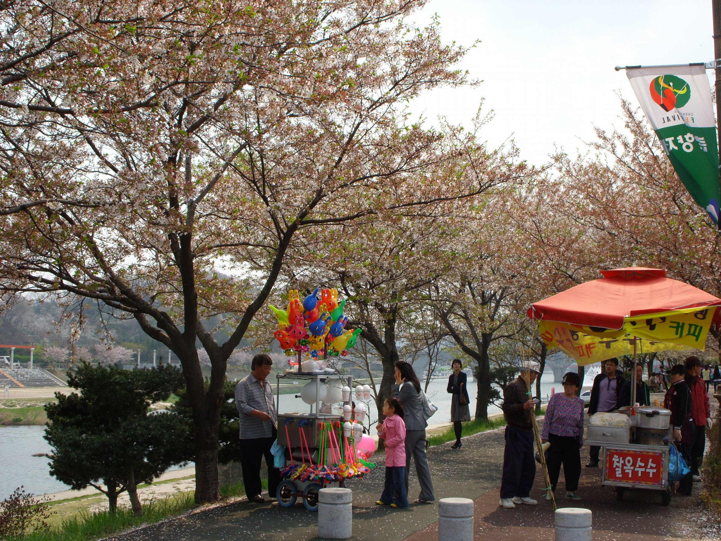 Yocheon river in spring with trees and flowers in namwon south free mightylinksfo