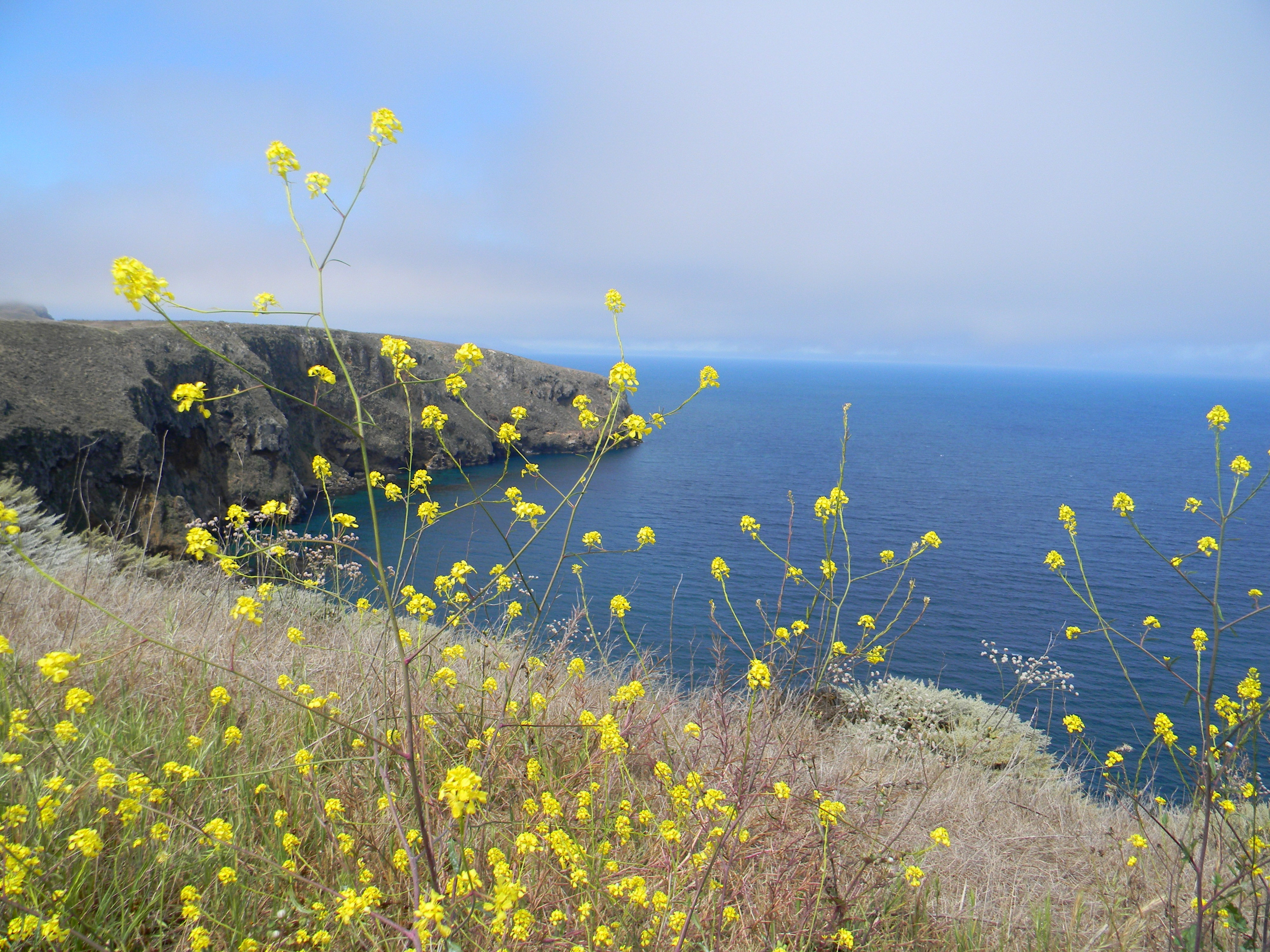 Seashore With Yellow Flowers At Channel Islands National Park