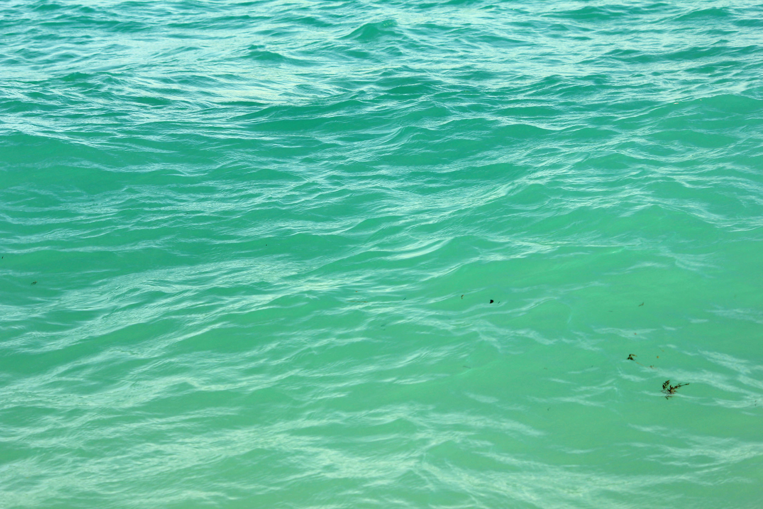 Green Water : Blue-green water at Miami, Florida - Free Public Domain Stock Photo