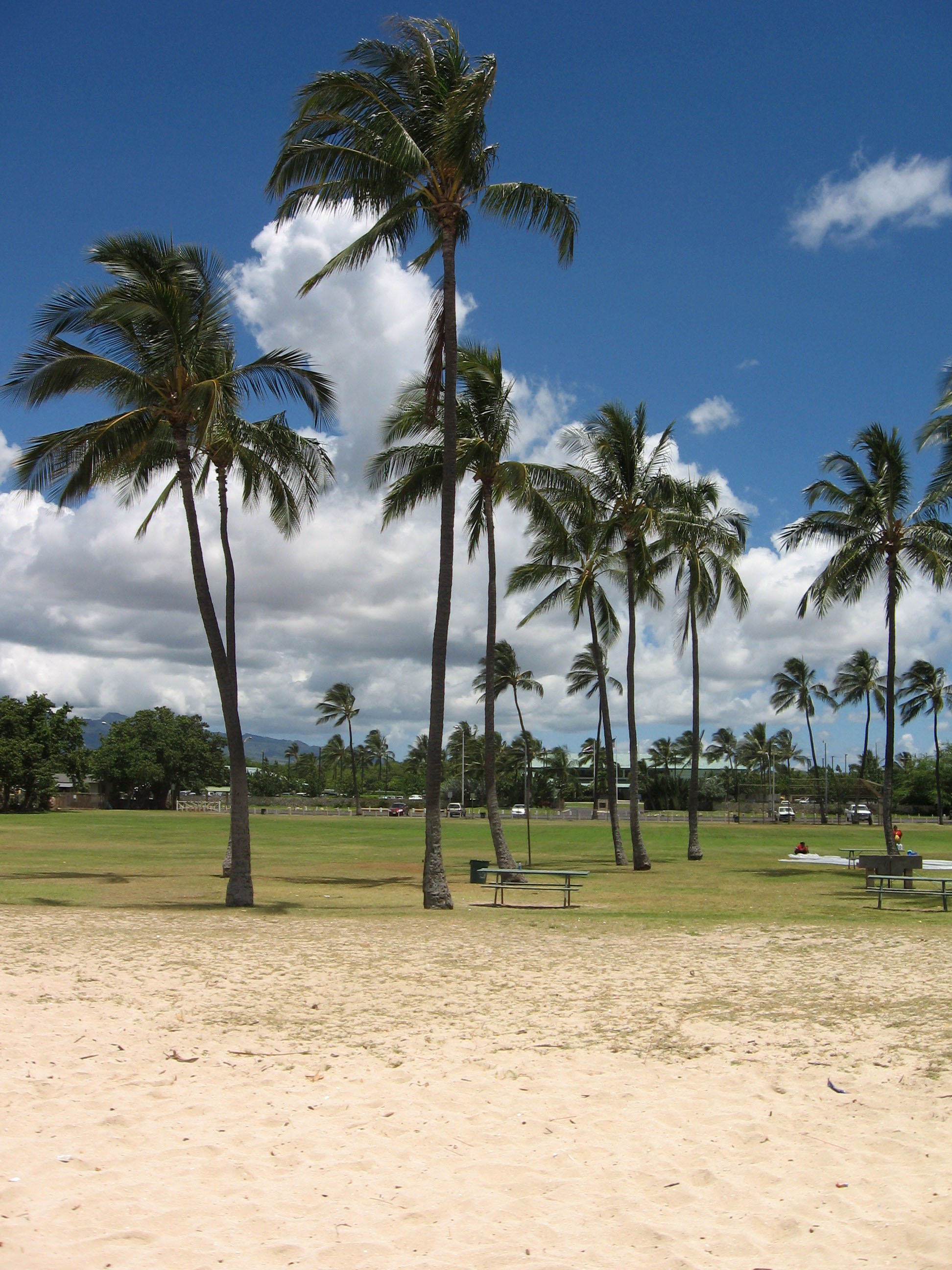 Ewa Beach Landscape With Palm Trees And Sky In Hawaii Photo By Drums600