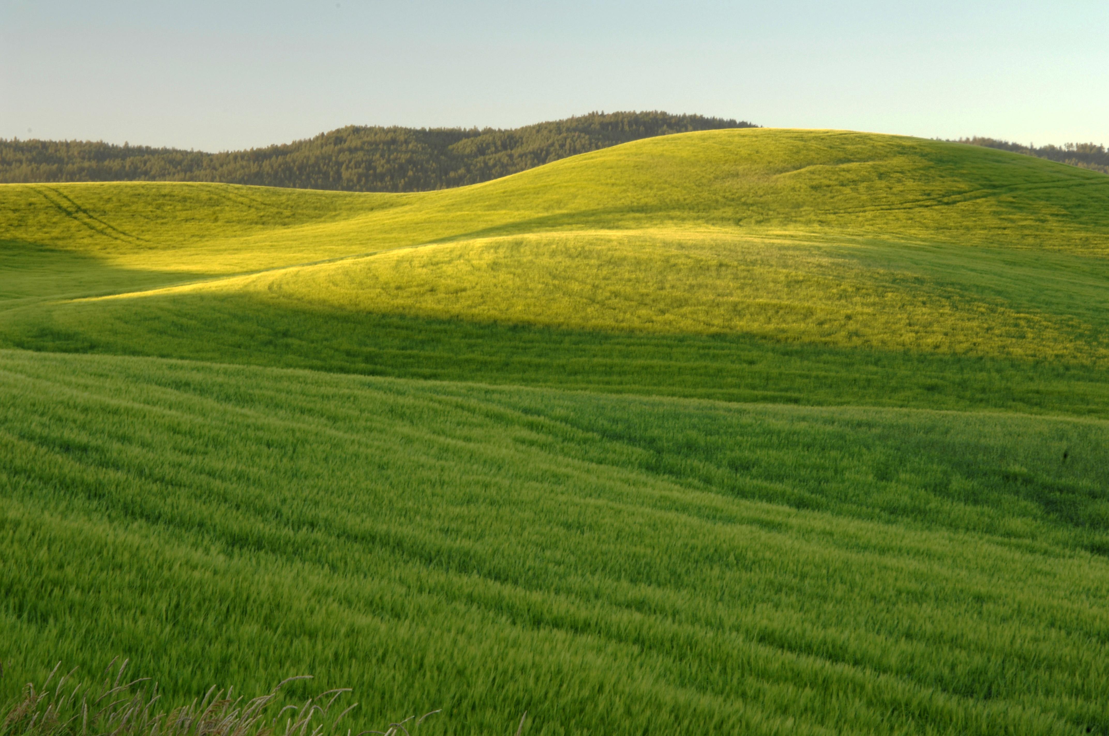 Green Grassy Hills Landscape Image Free Stock Photo Public