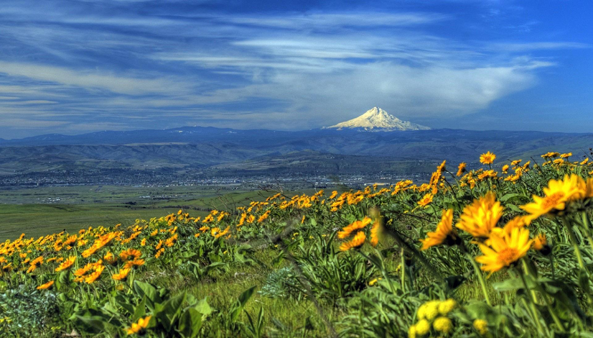 Landscape Near Mount Hood Oregon Image Free Stock Photo