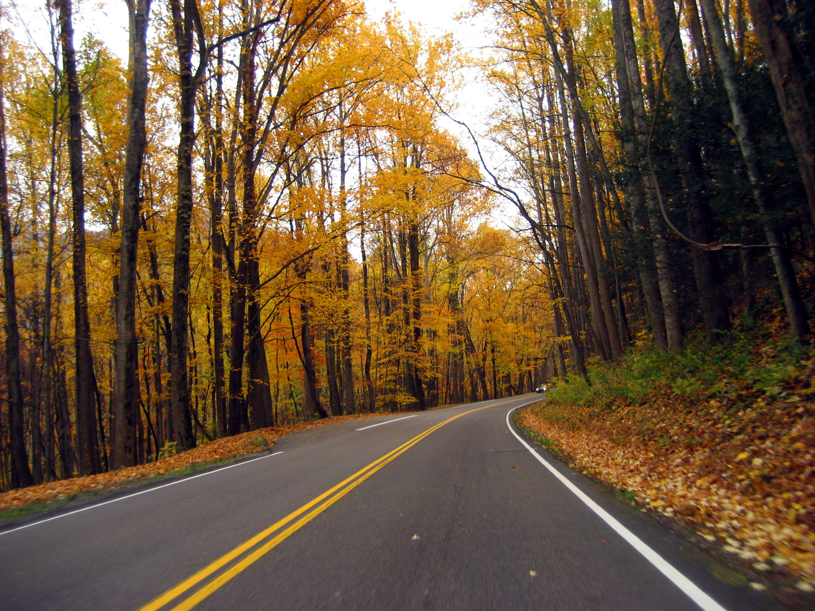 Autumn Roadway Between The Trees In Great Smoky Mountains