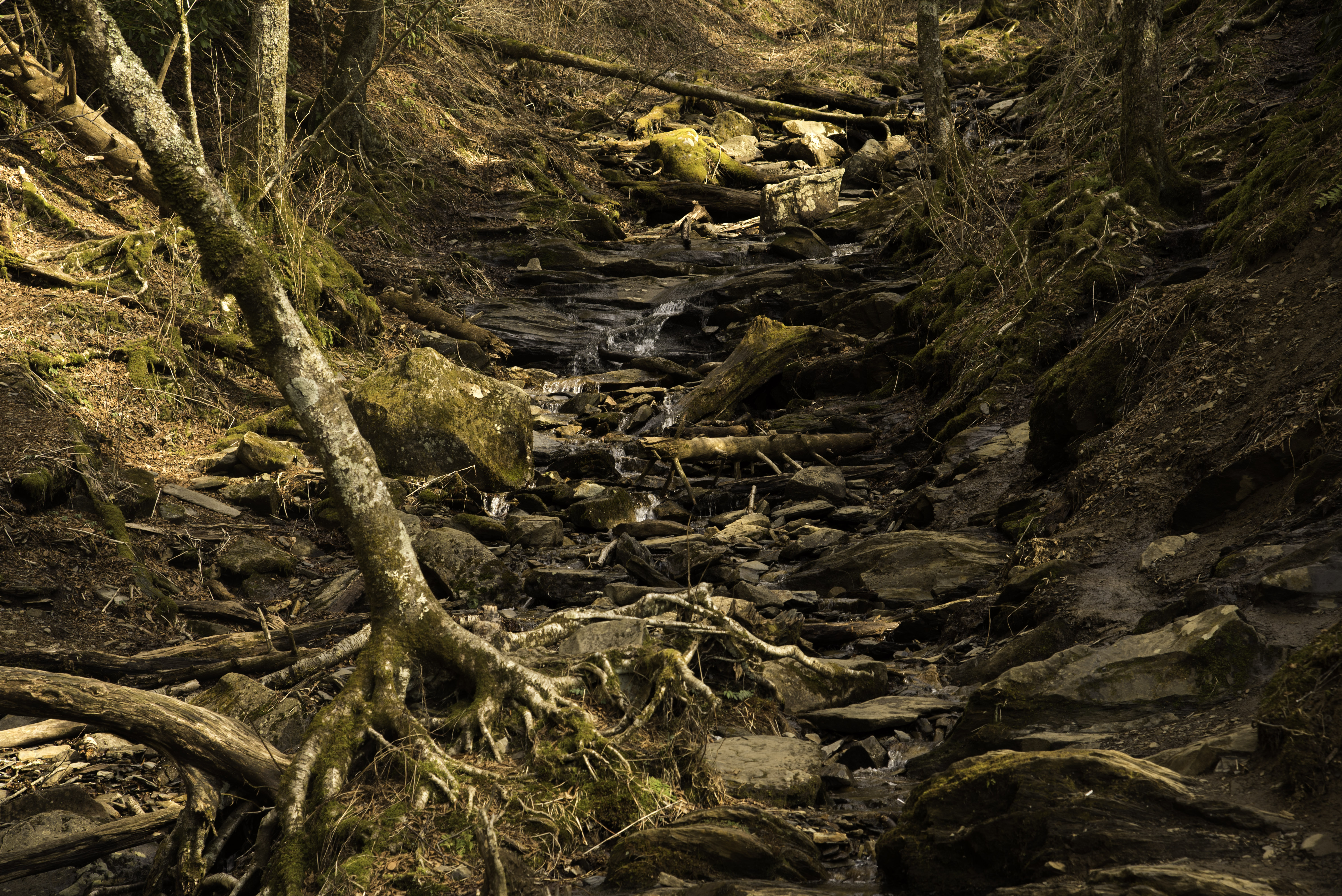 Great Smoky Mountains National Park - Free Stock Photos and public ...