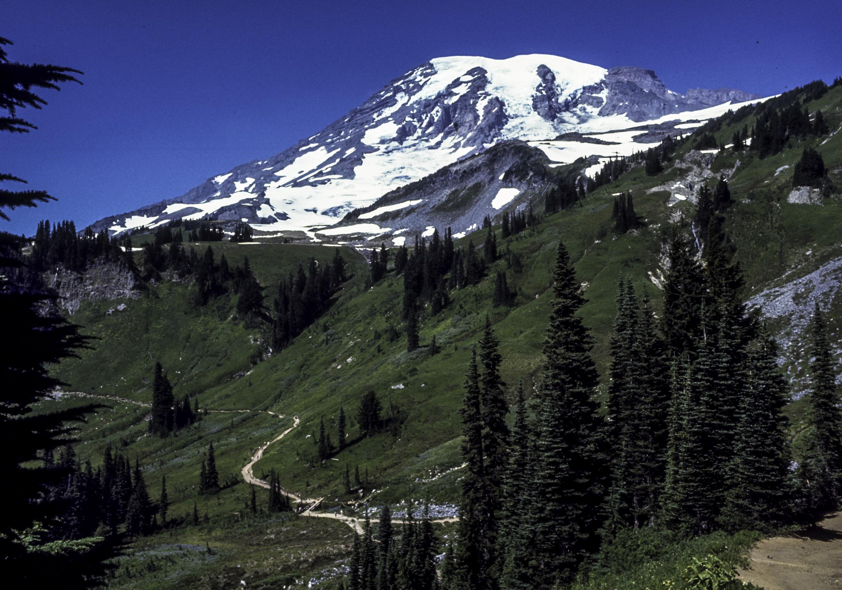 Image result for Mount Rainier National Park