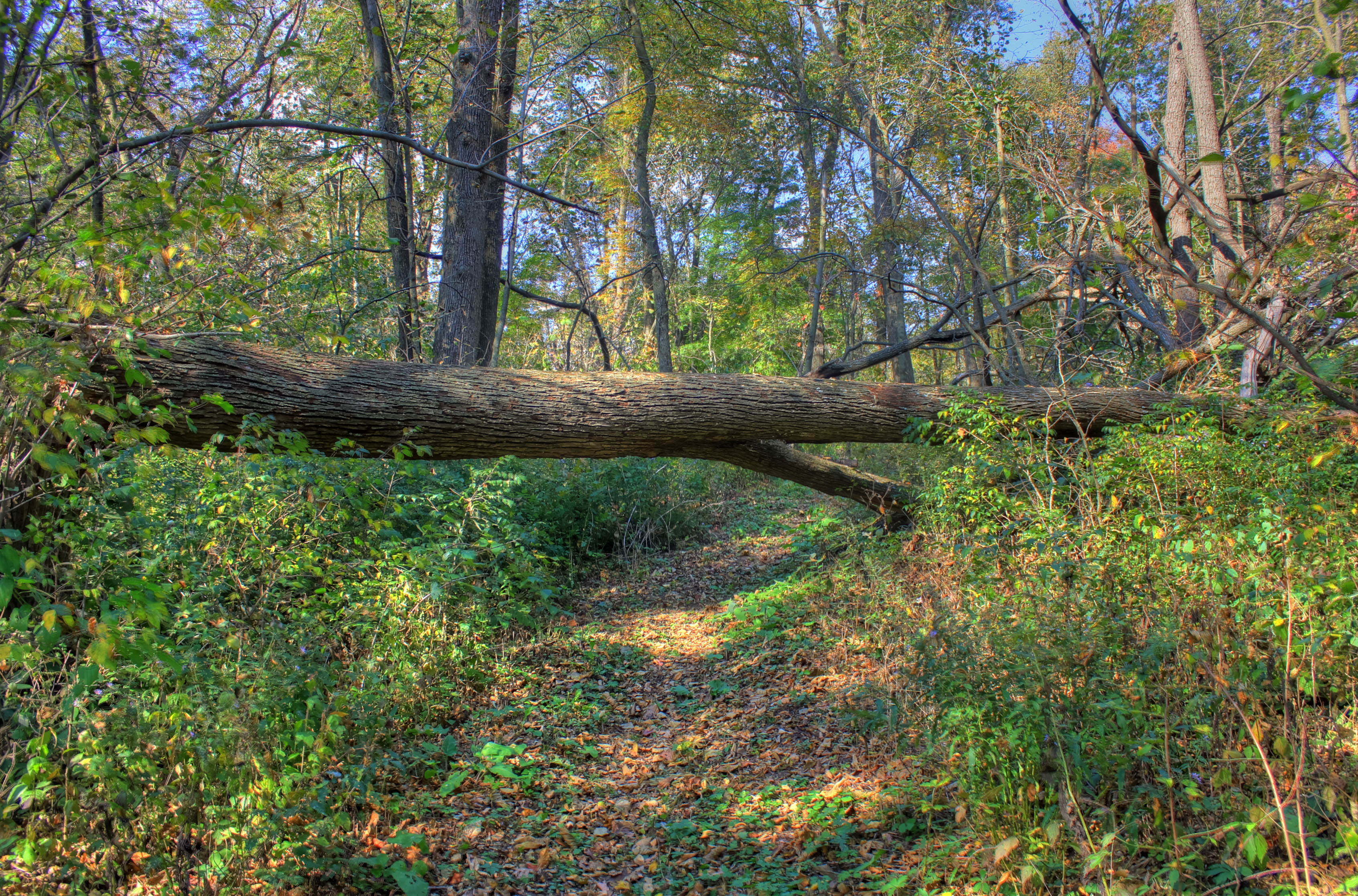 Fallen Tree On The Trail At Belmont Mounds State Park