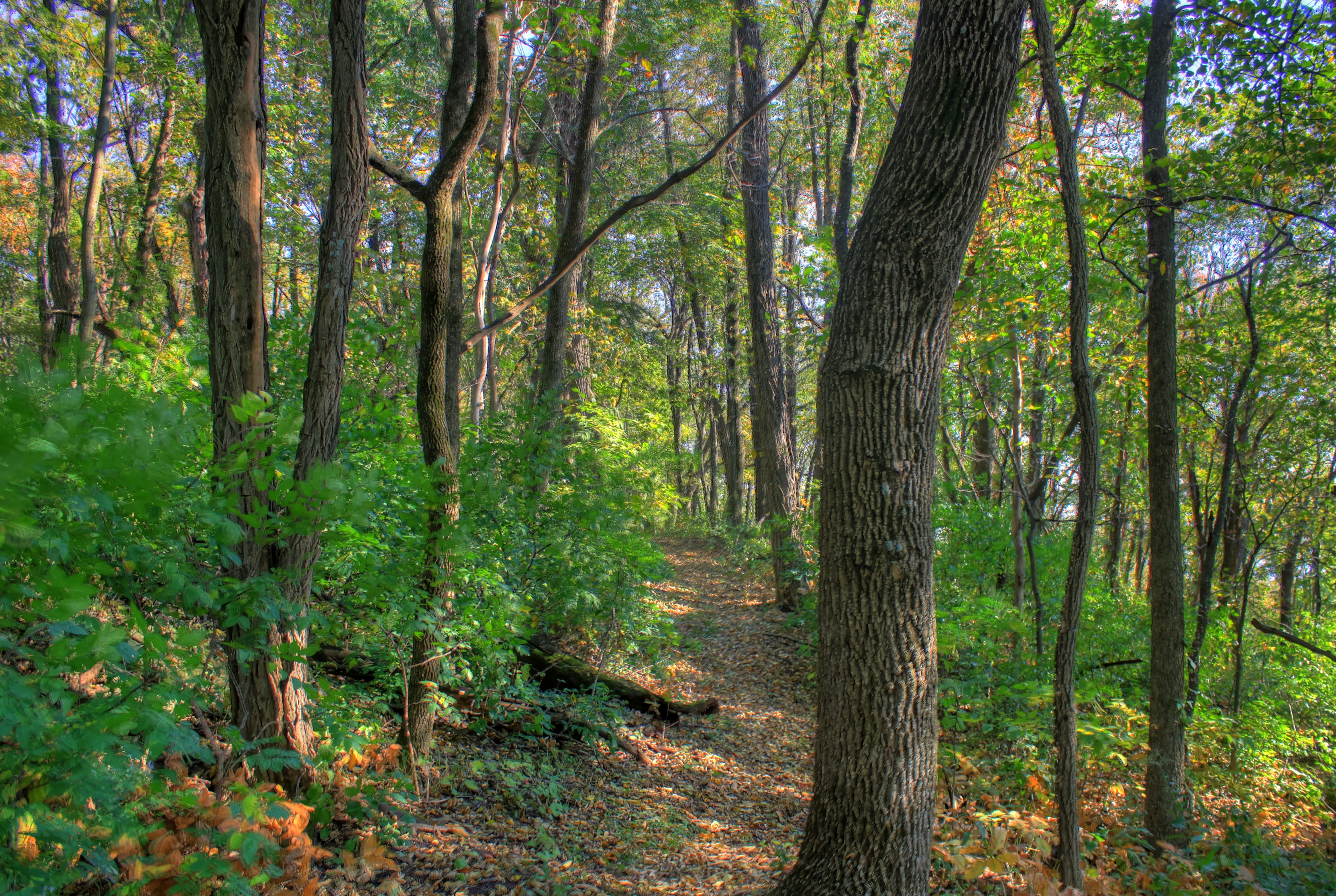 Hiking Trail In Woods At Belmont Mounds State Park