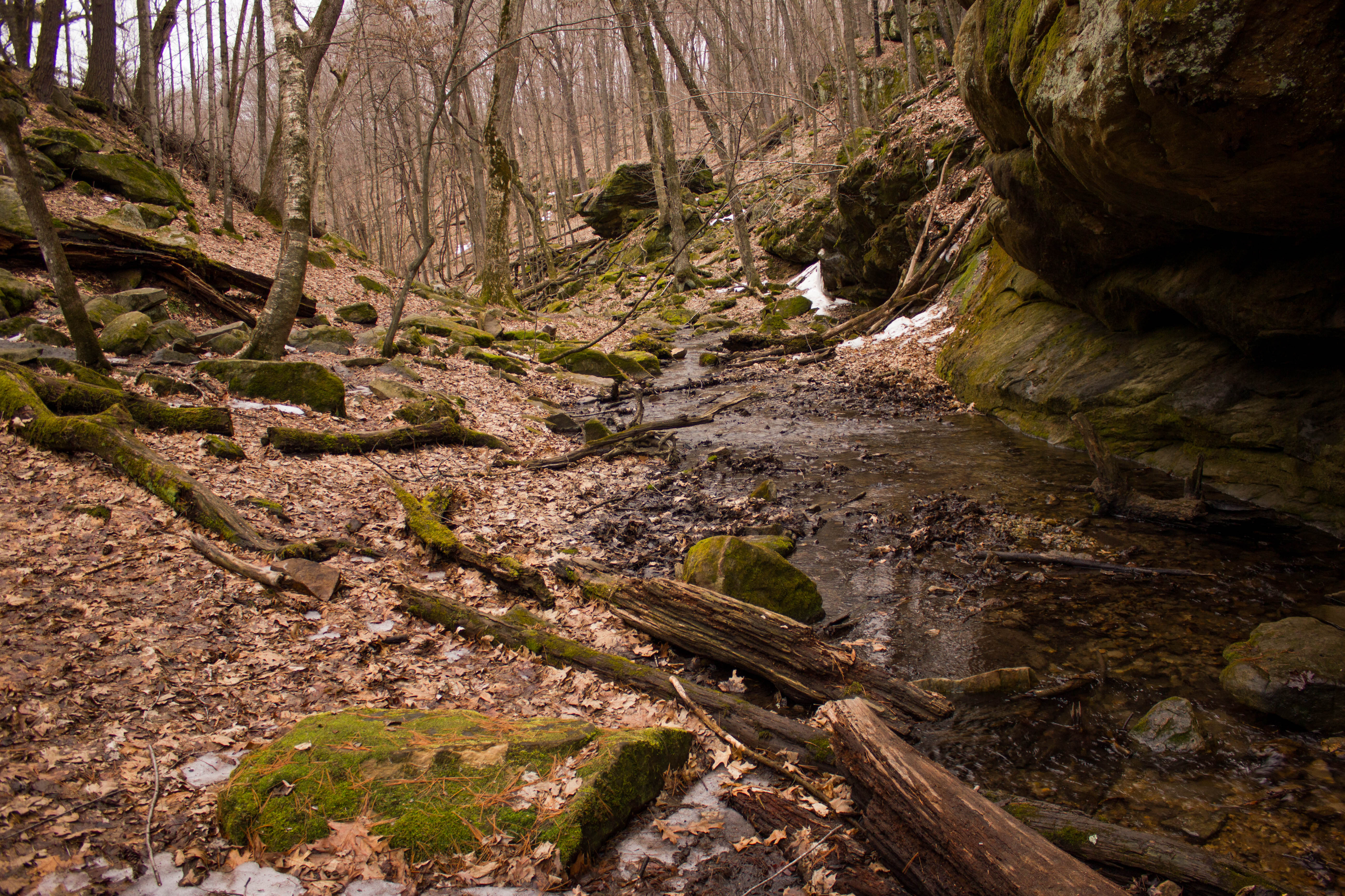 creek into the woods at governor dodge state park wisconsin free. Cars Review. Best American Auto & Cars Review