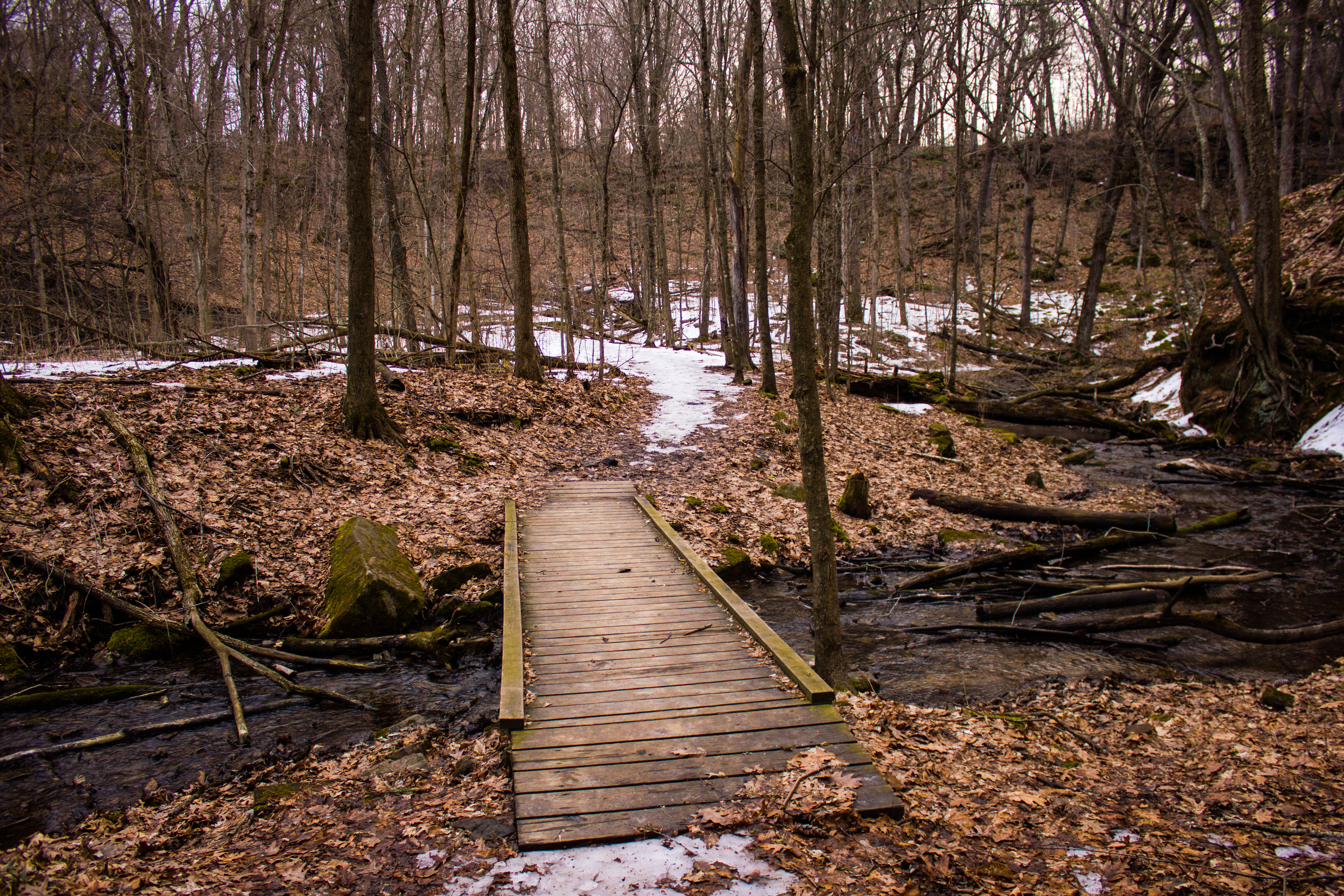 Bridge in the landscape
