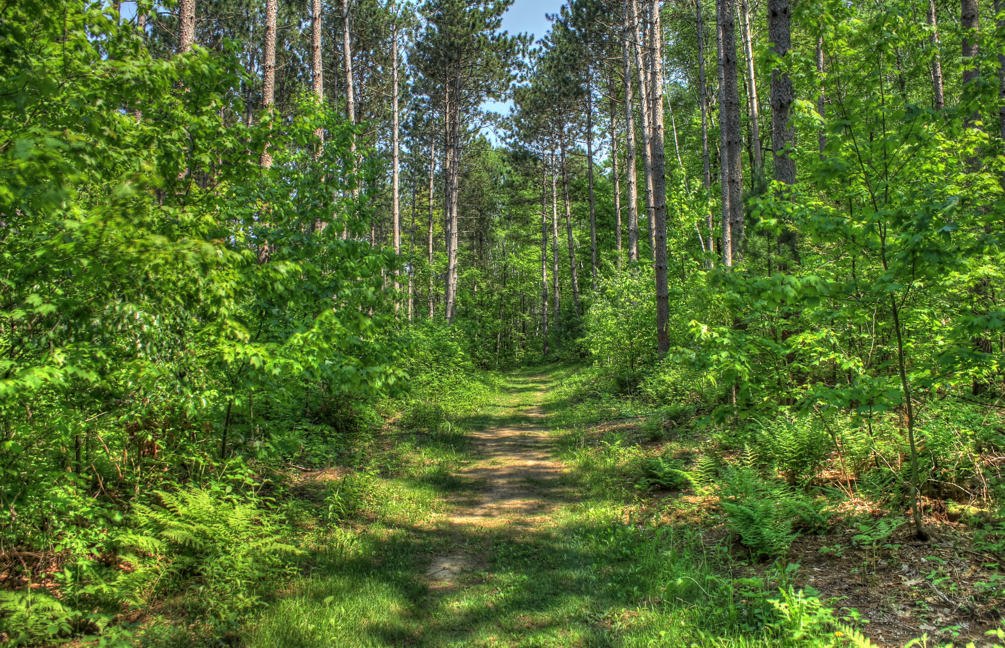 Forest Hiking Path At Hoffman Hills State Recreation Area