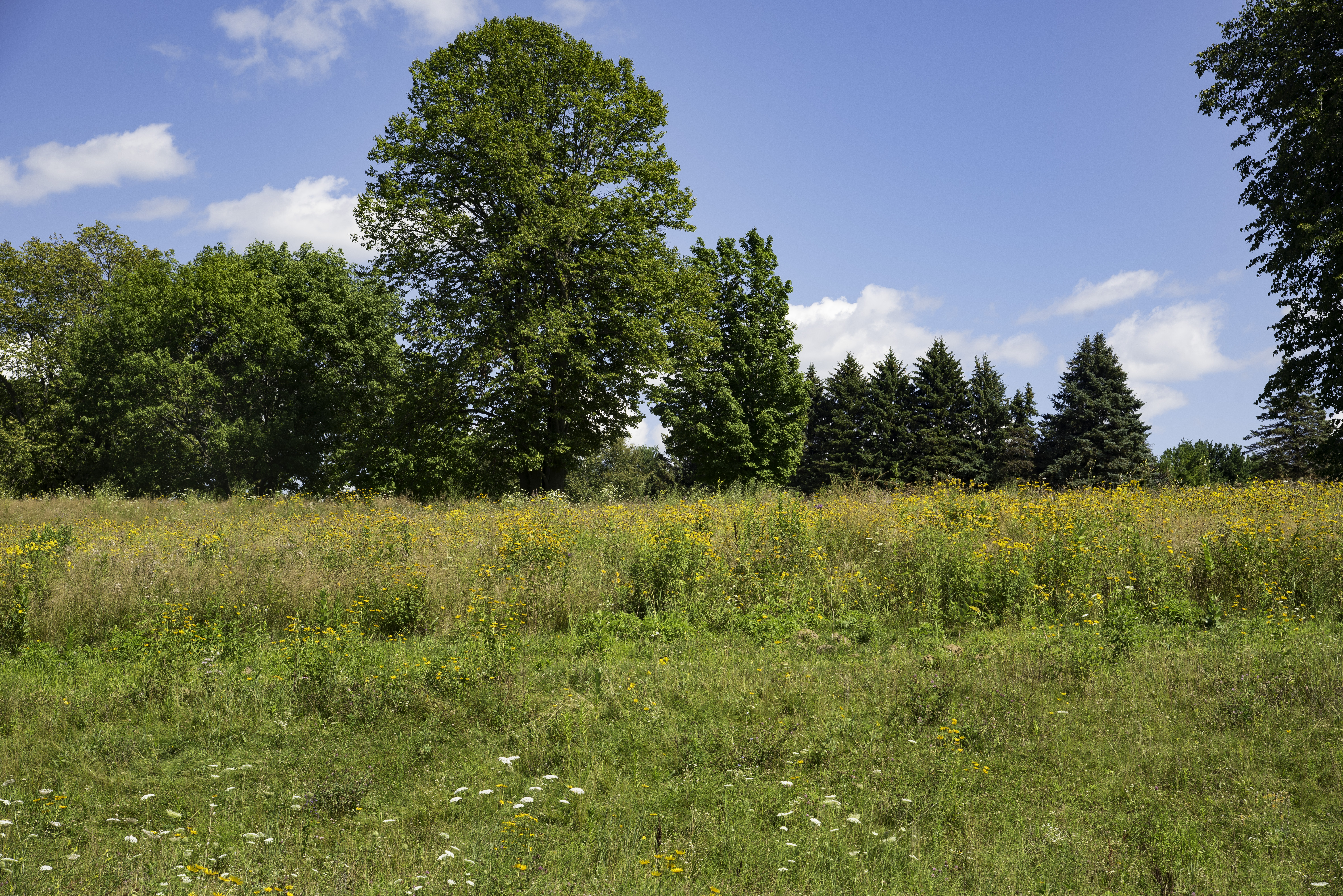 Summer Landscape With Yellow Flowers At Horicon Marsh Image Free