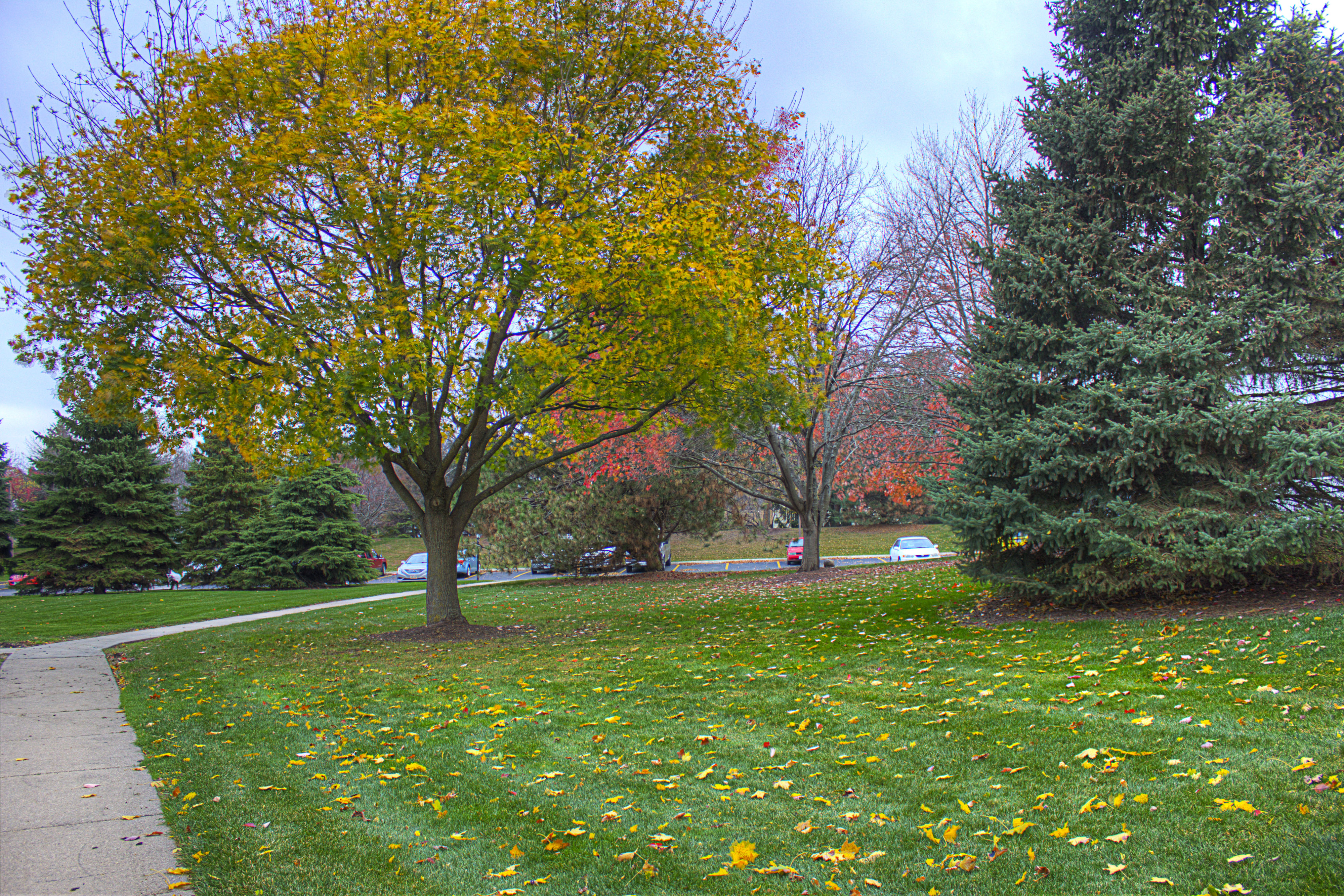Autumn Trees in Madison, Wisconsin image - Free stock photo - Public ...