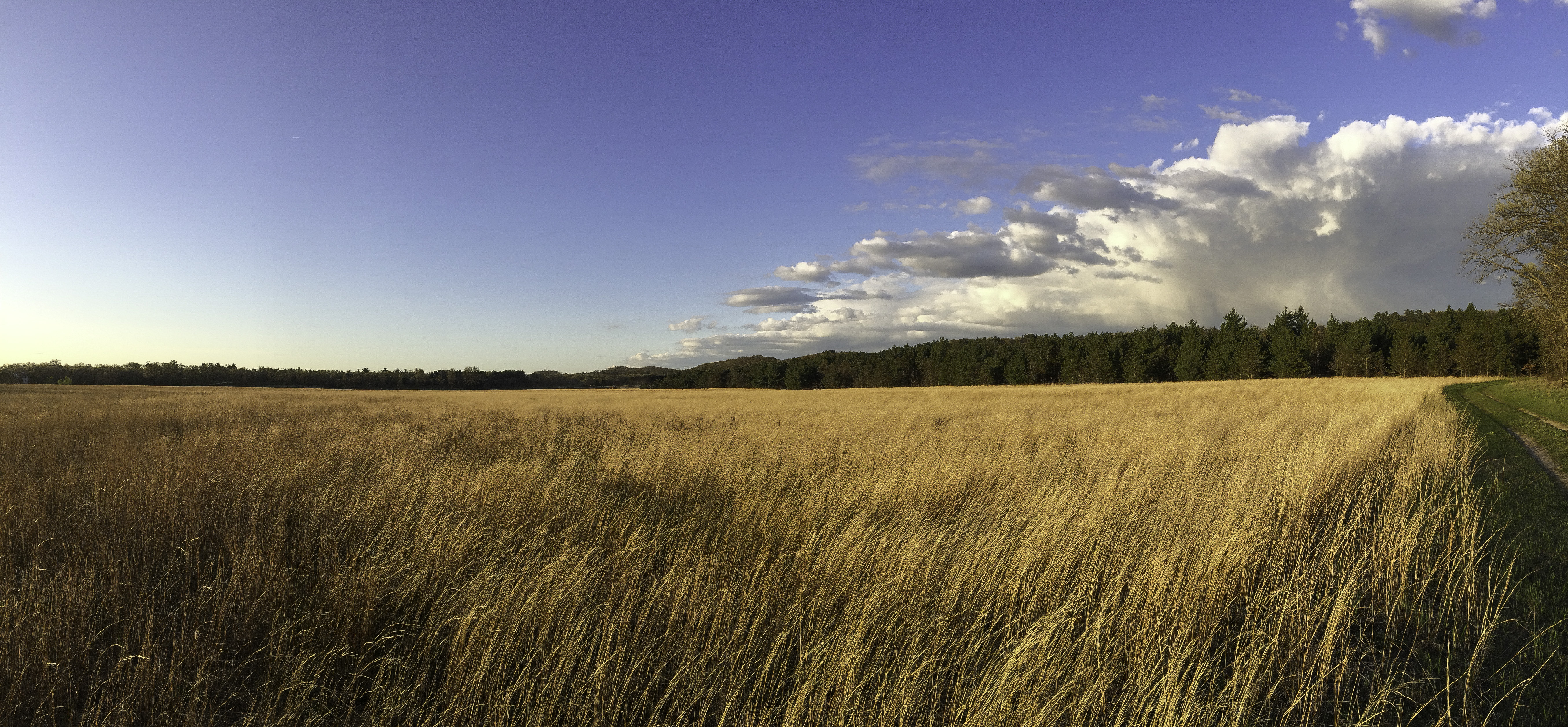 Field with long grass with sky and clouds and trees for Like long grasses