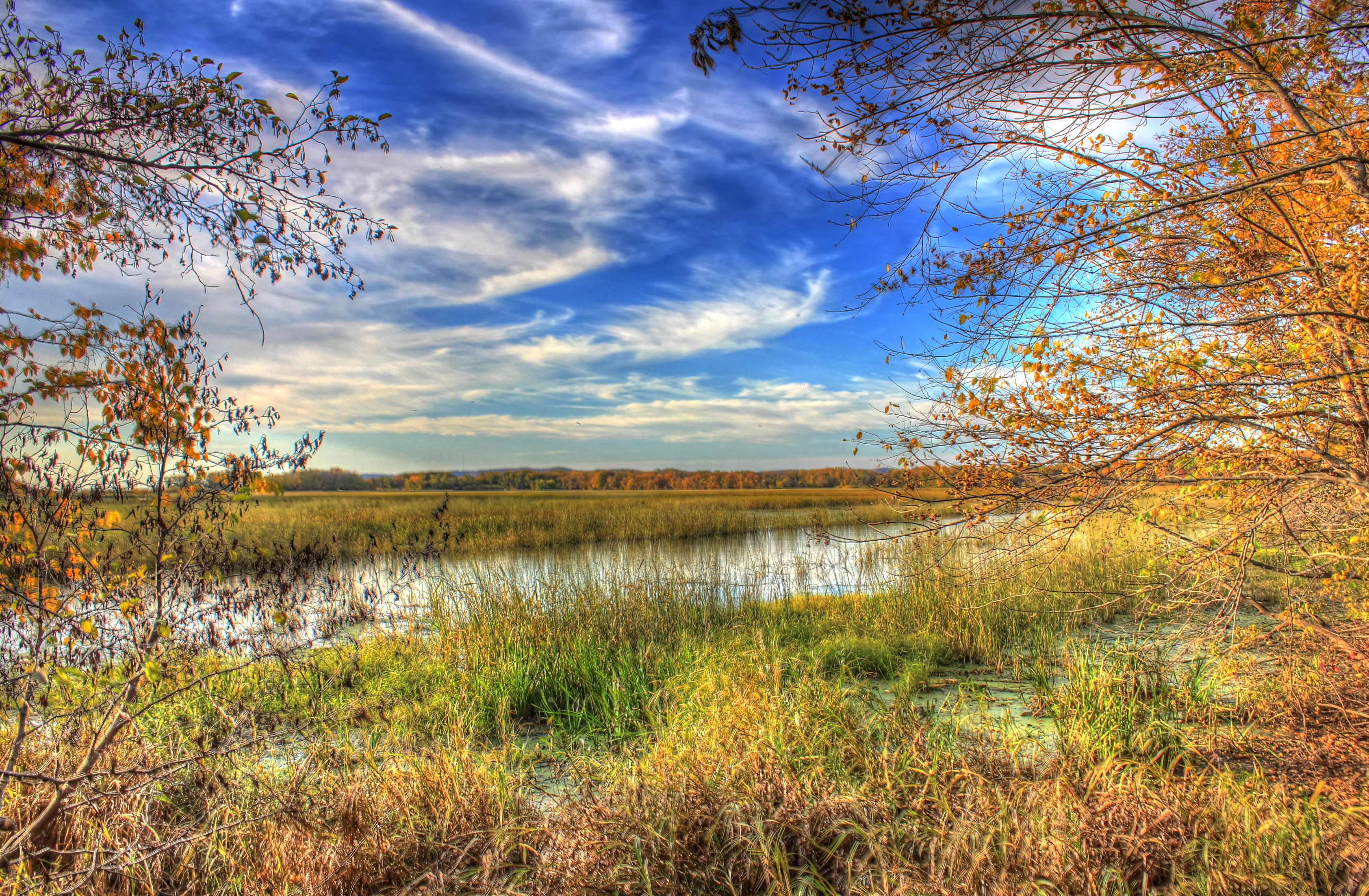 Marshes and Natural Landscape