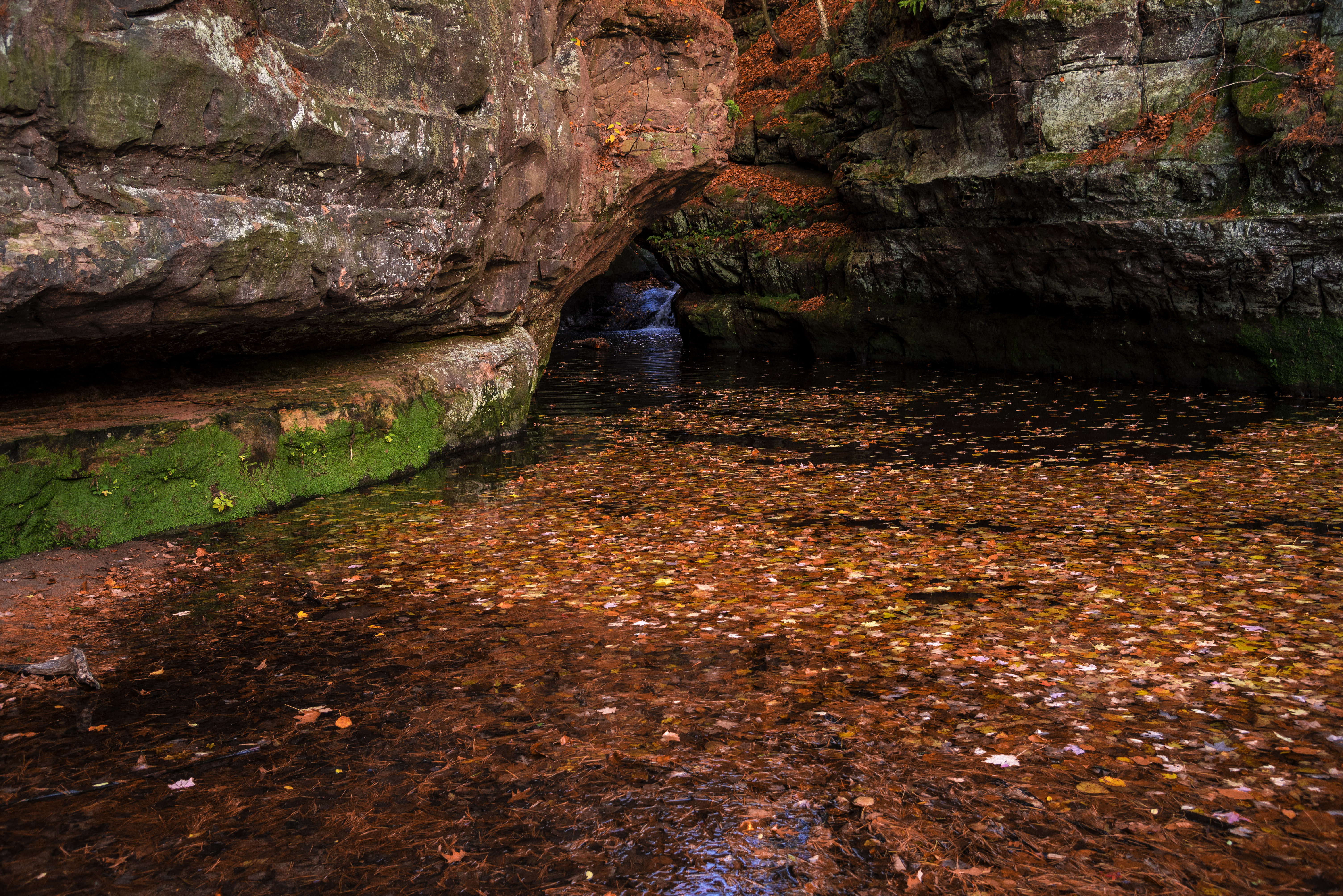 red-leaves-in-the-waters-of-the-gorge-pewits-nest-wisconsin.jpg