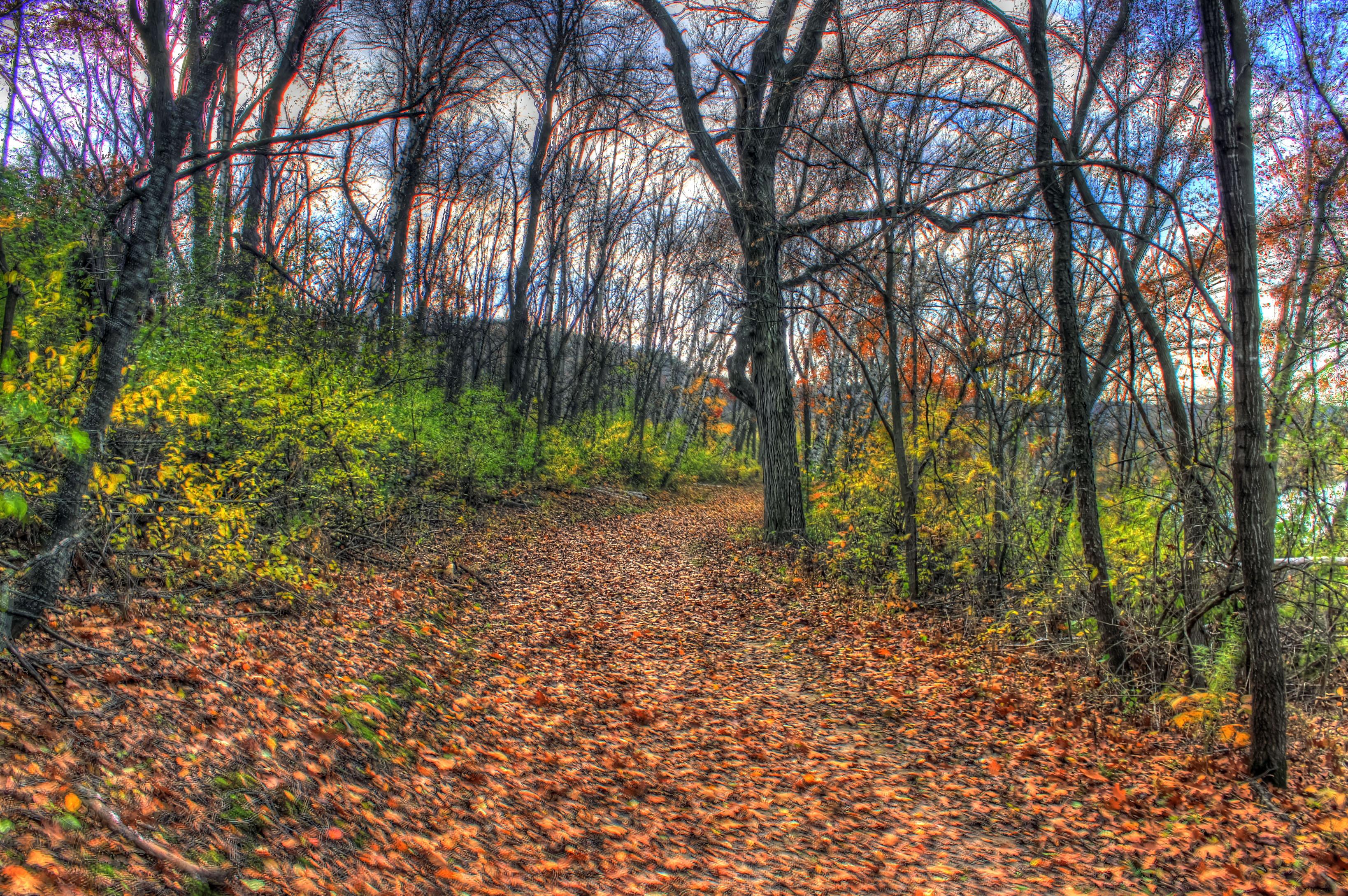 Hiking Trail at Indian lake